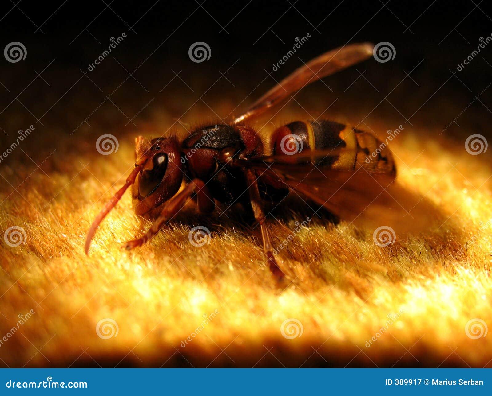 Una grande vespa