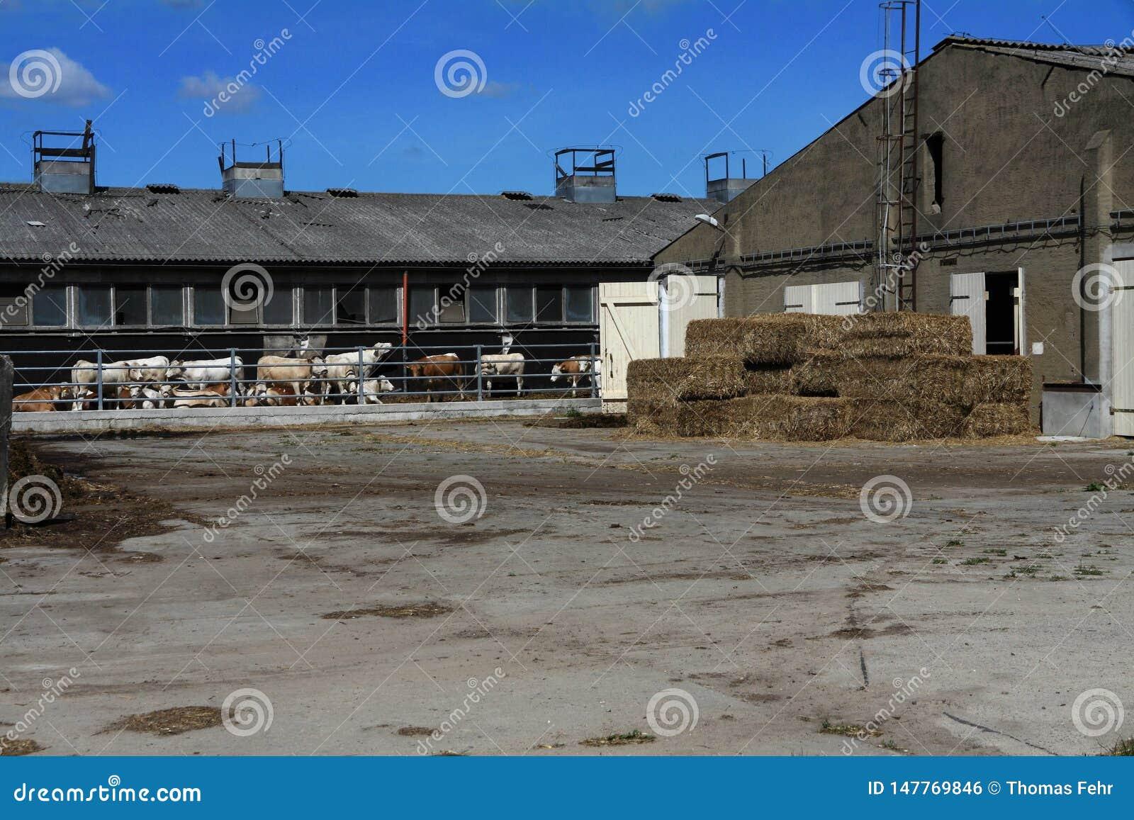Una granja con las vacas