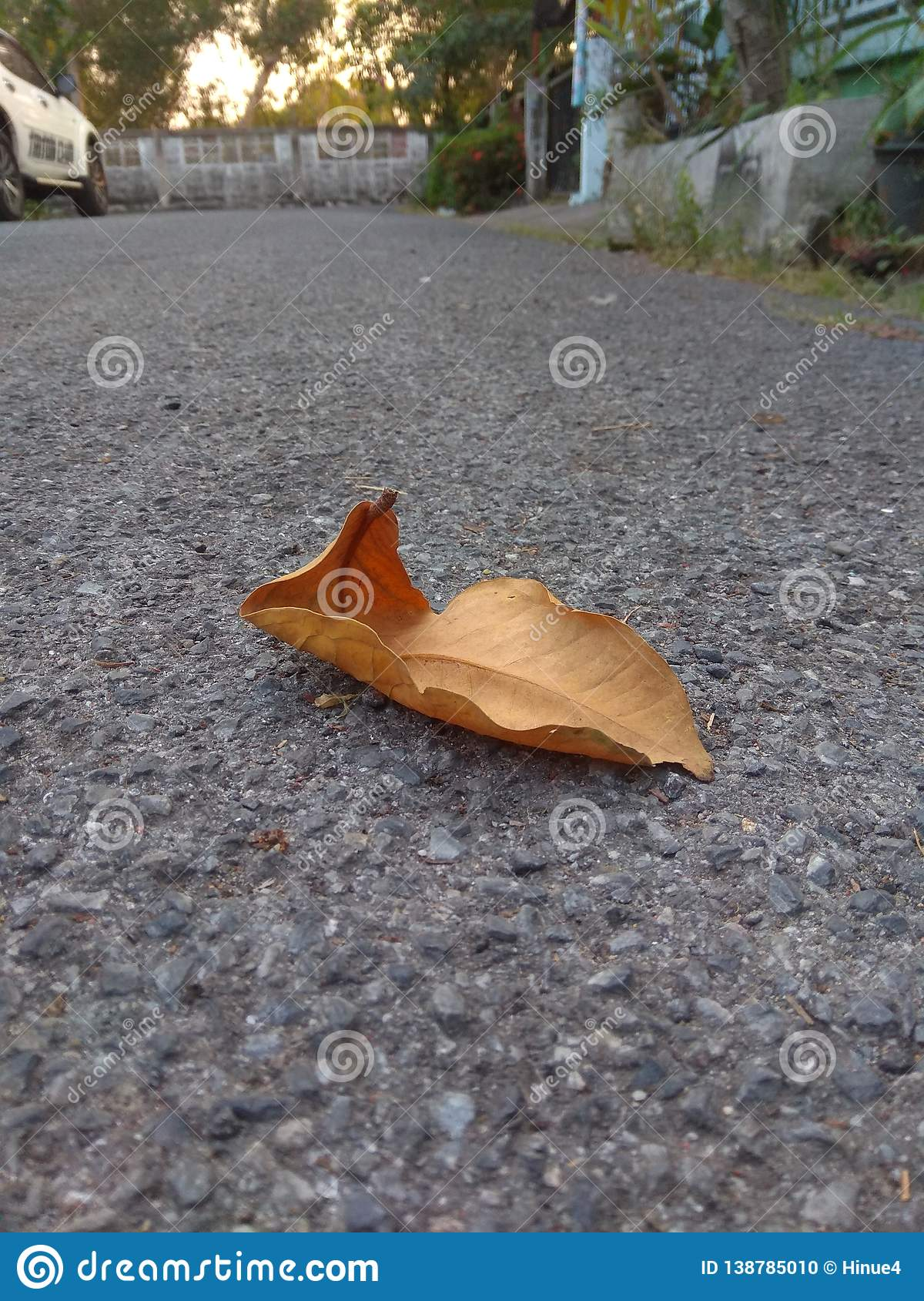 Una hoja seca caida en el piso del camino concreto