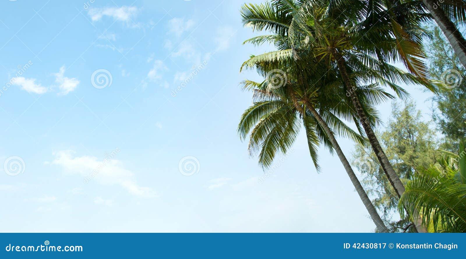 Una imagen de palmeras agradables