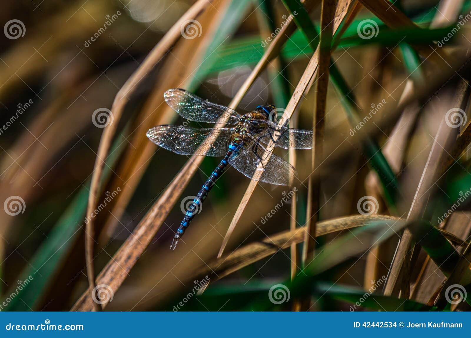 Una libélula detalladamente