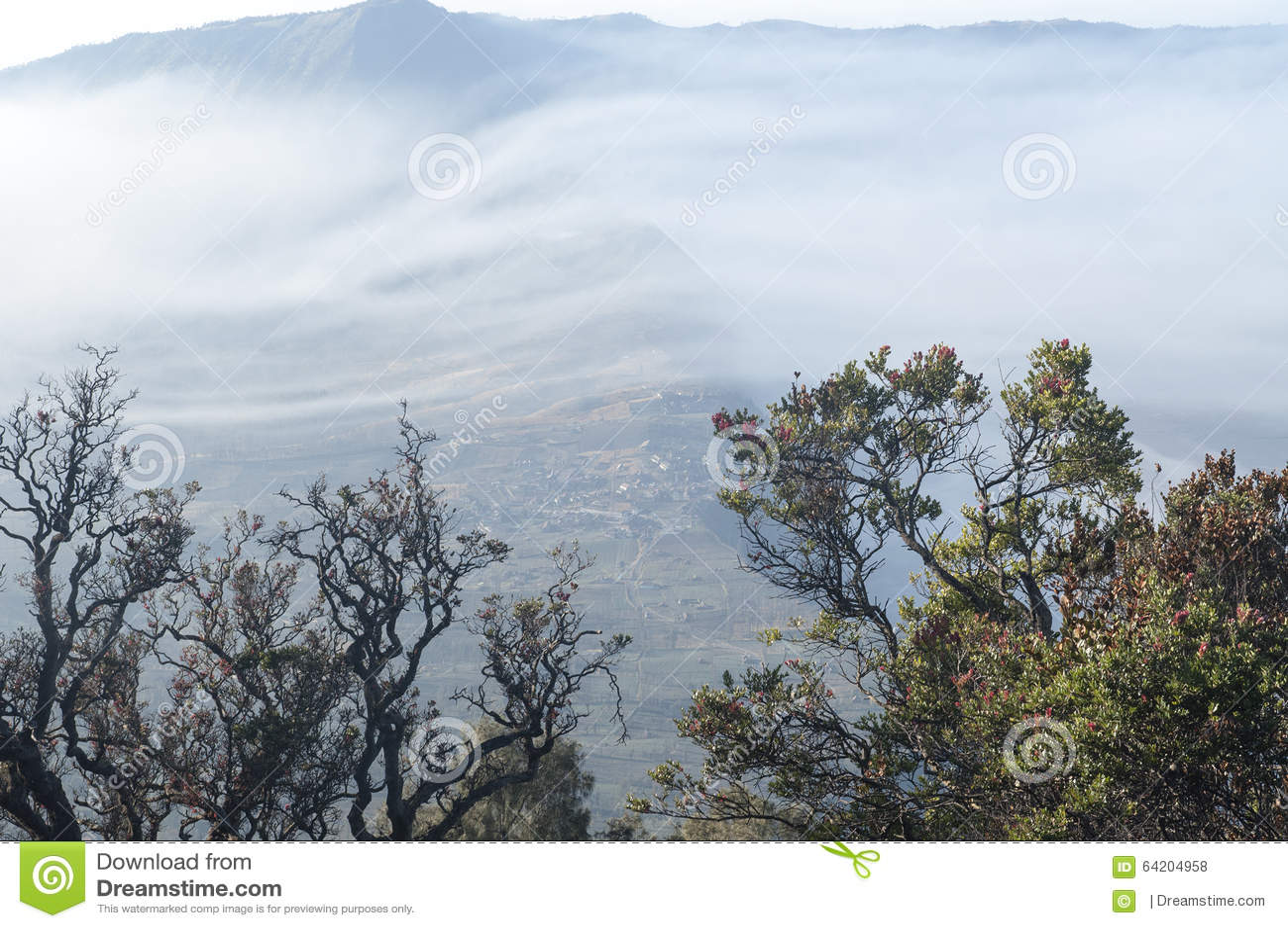Una mañana de niebla en Desa Pasuruan, Java Oriental