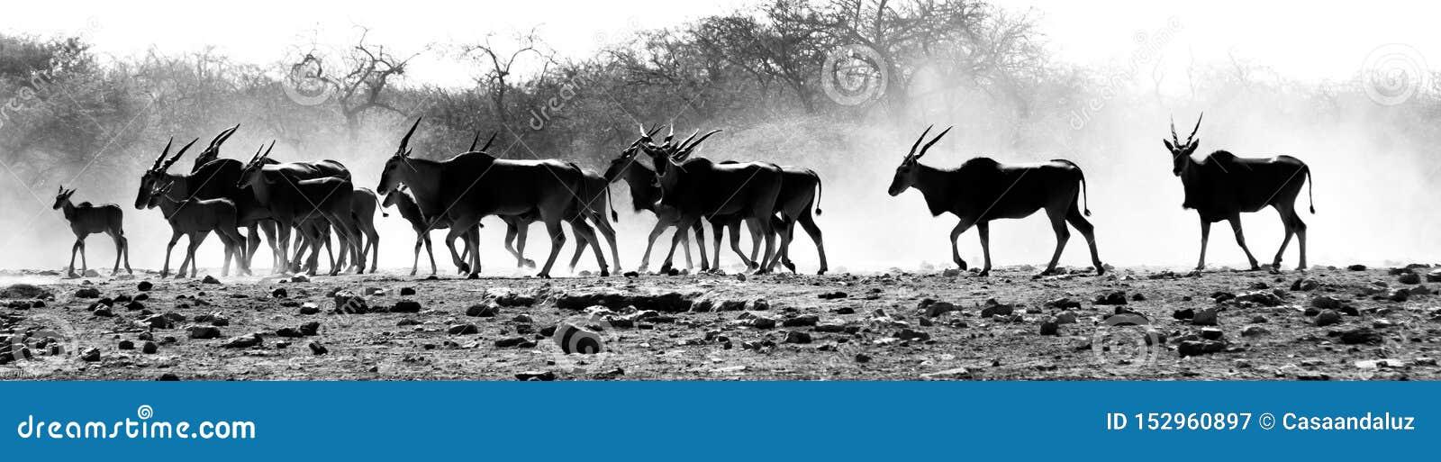 Una manada de antílopes en el desierto africano