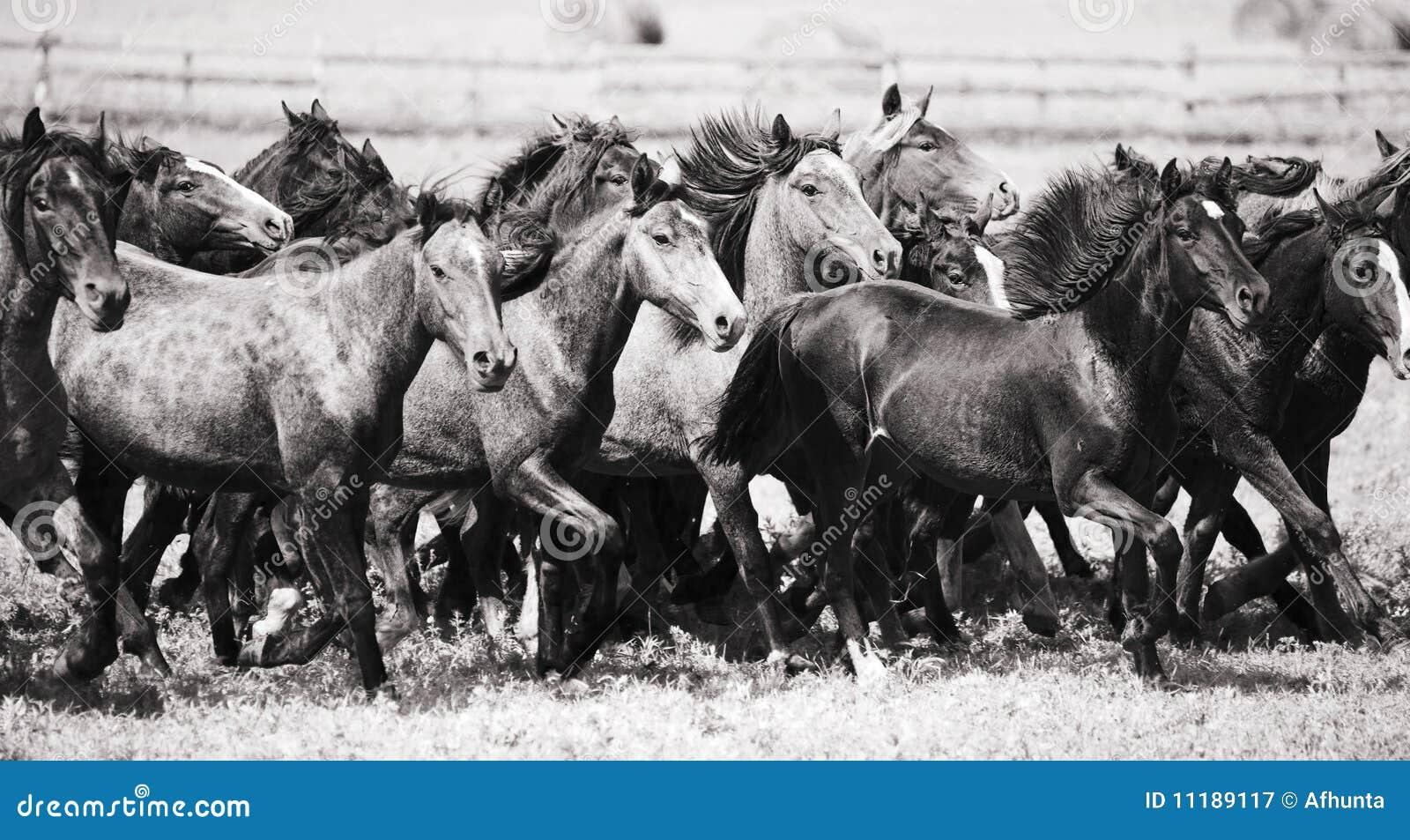 Una manada de caballos jovenes