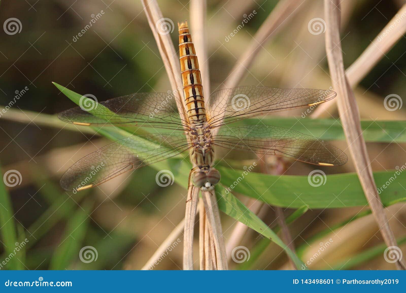 Una mariposa en la hoja de la hierba
