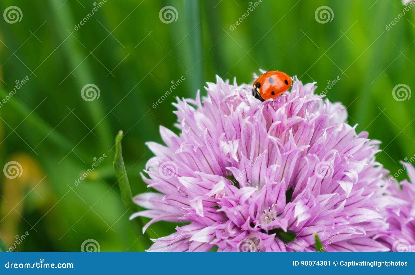 Atractivo Flor En Las Uñas Ornamento - Ideas Para Pintar Uñas - knxc ...