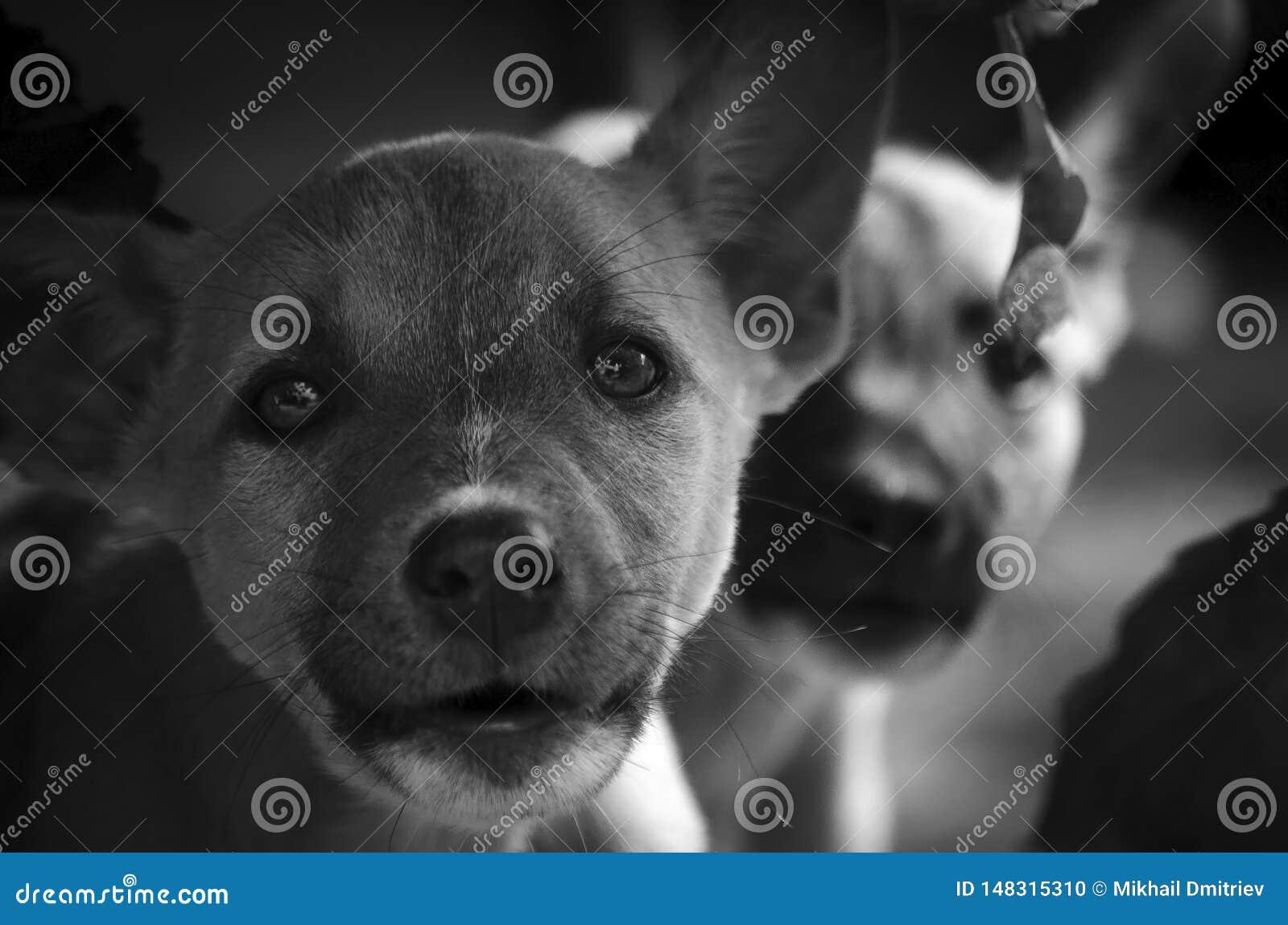 Una mirada muy profunda de un tan pequeño perro de la calma