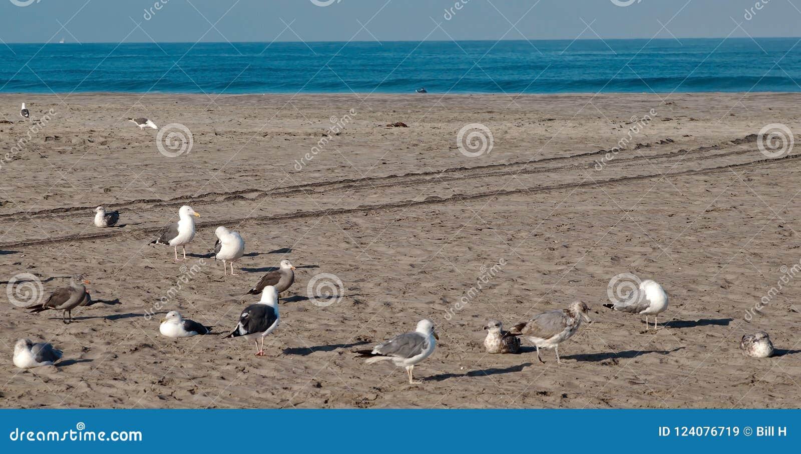 Una moltitudine di gabbiani su una spiaggia