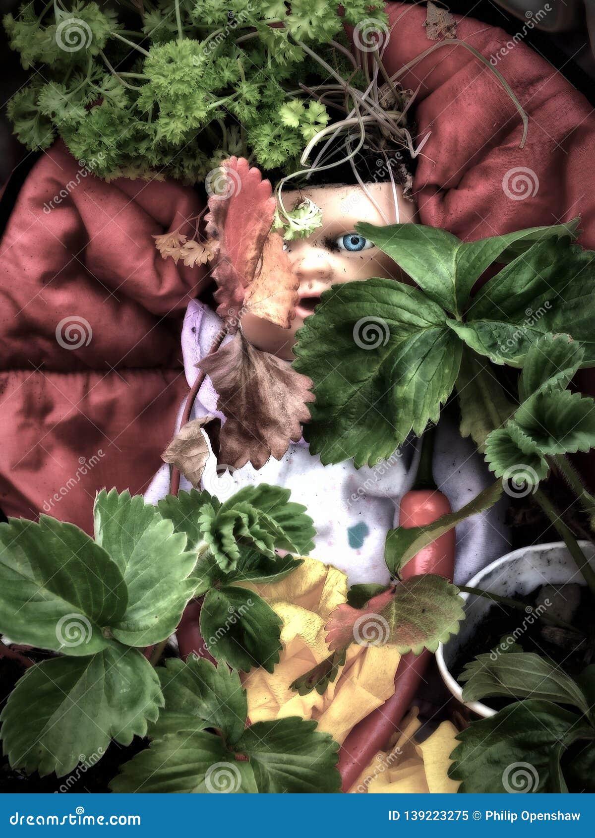 Una muñeca sucia vieja del vintage con un ojo azul asustadizo espeluznante que mira fijamente a través de laves y de plantas en u