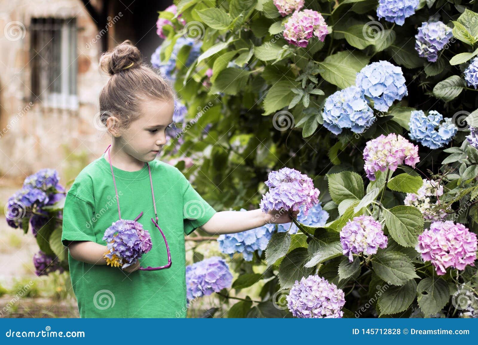 Una muchacha de cuatro años escoge las flores de una planta grande de la hortensia