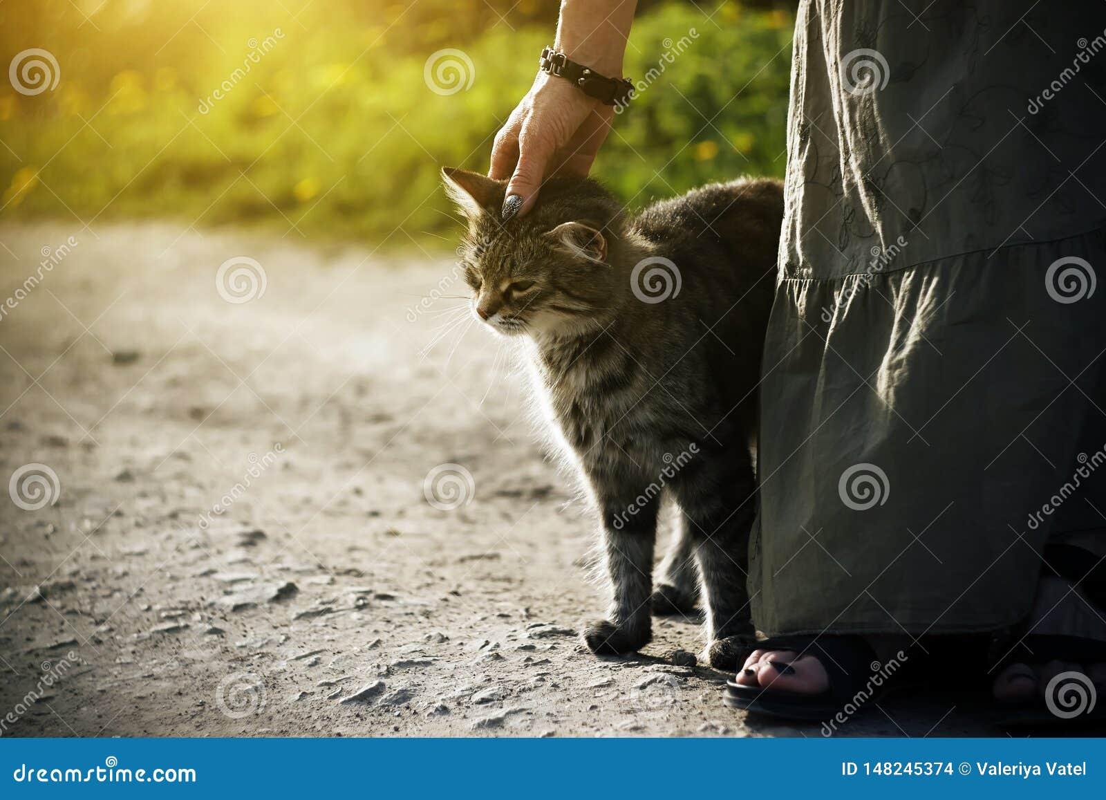 Una mujer en un vestido largo que frota ligeramente un gatito perdido rayado