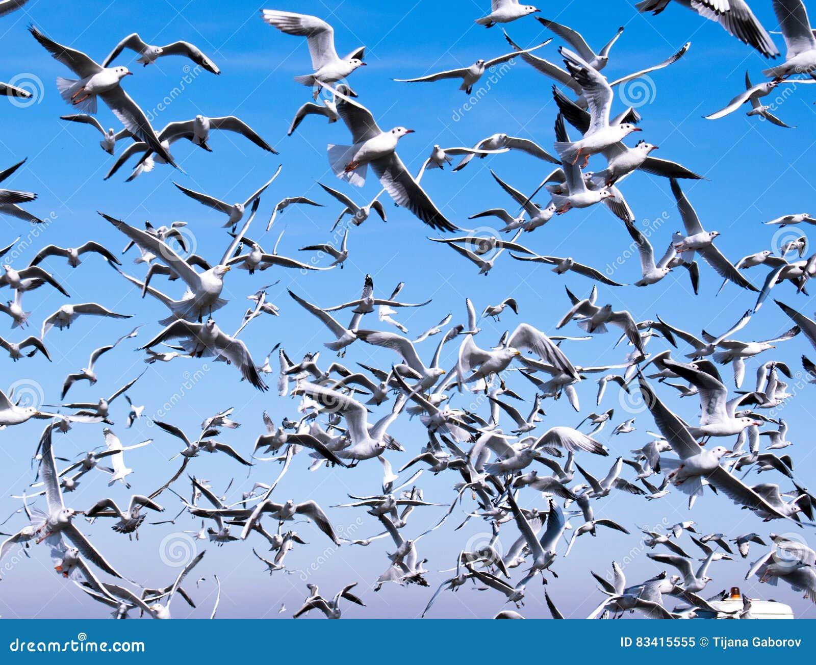 Una multitud de gaviotas