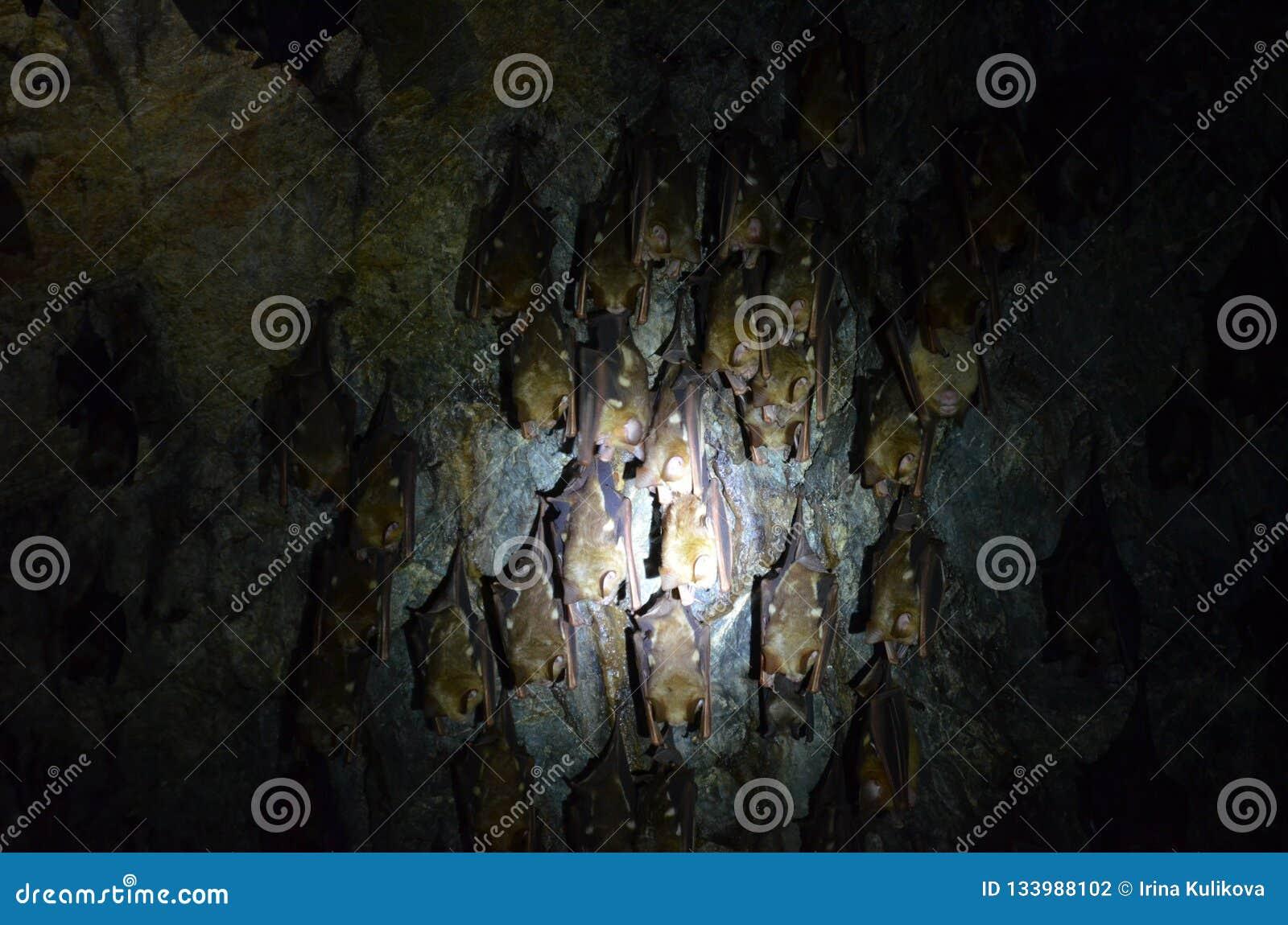 Una multitud de los palos que cuelgan en el techo de la cueva Palo el dormir