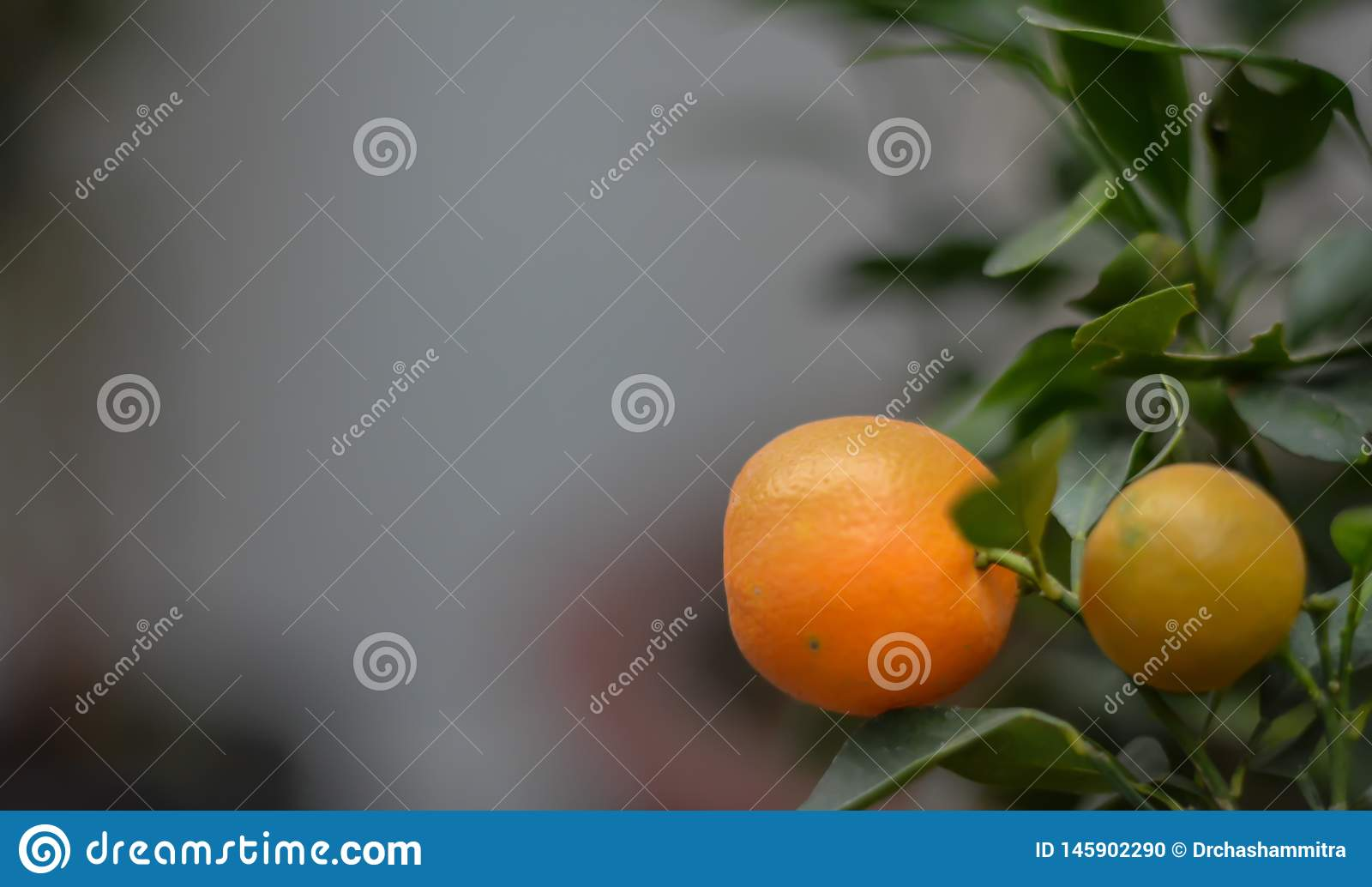 Una naranja fresca lista para madurar