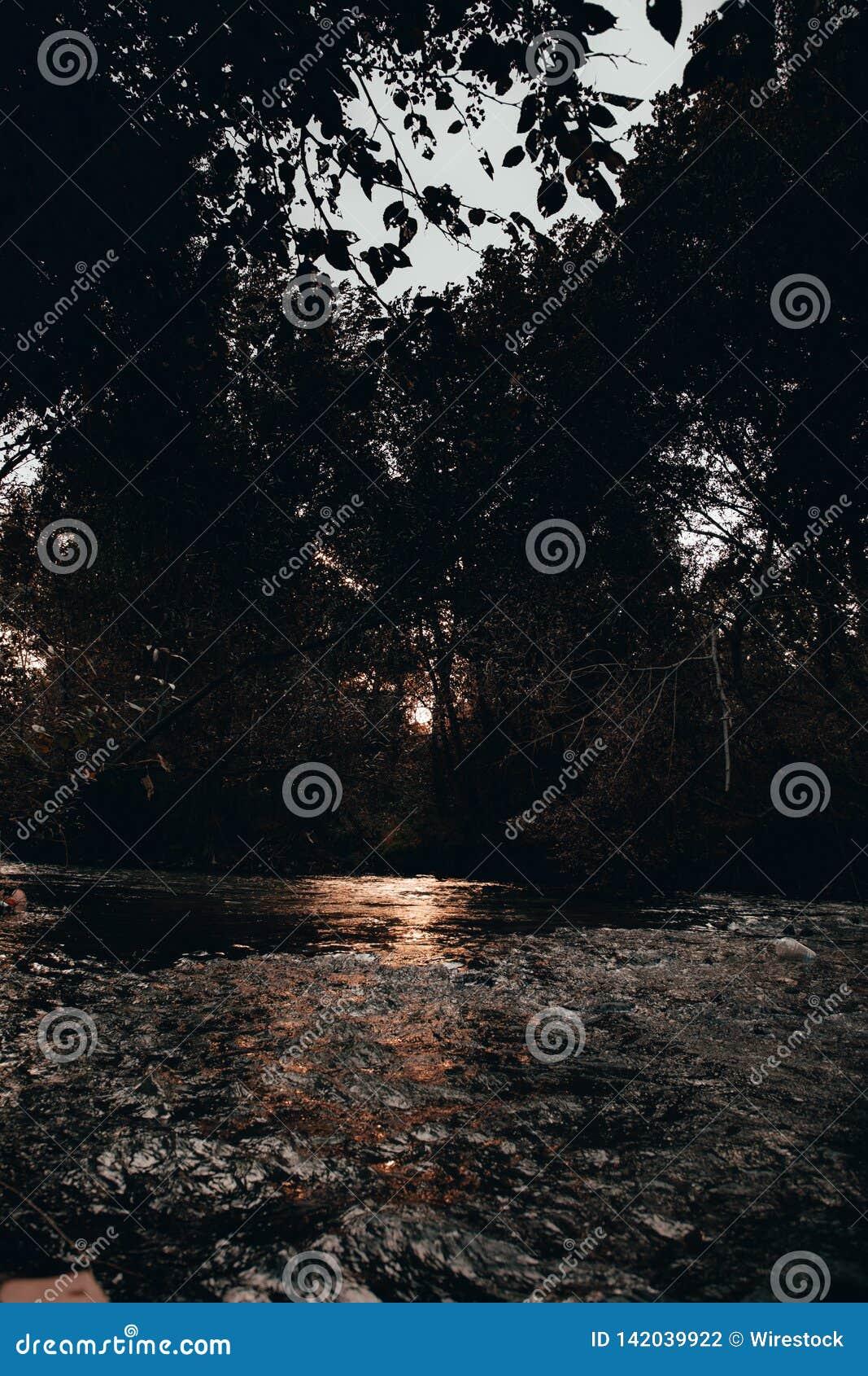 Una palude in una foresta