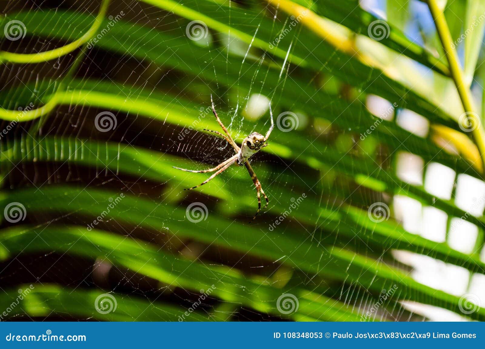 Magnífico Araña Arte De Uñas Web Galería - Ideas Para Esmaltes ...