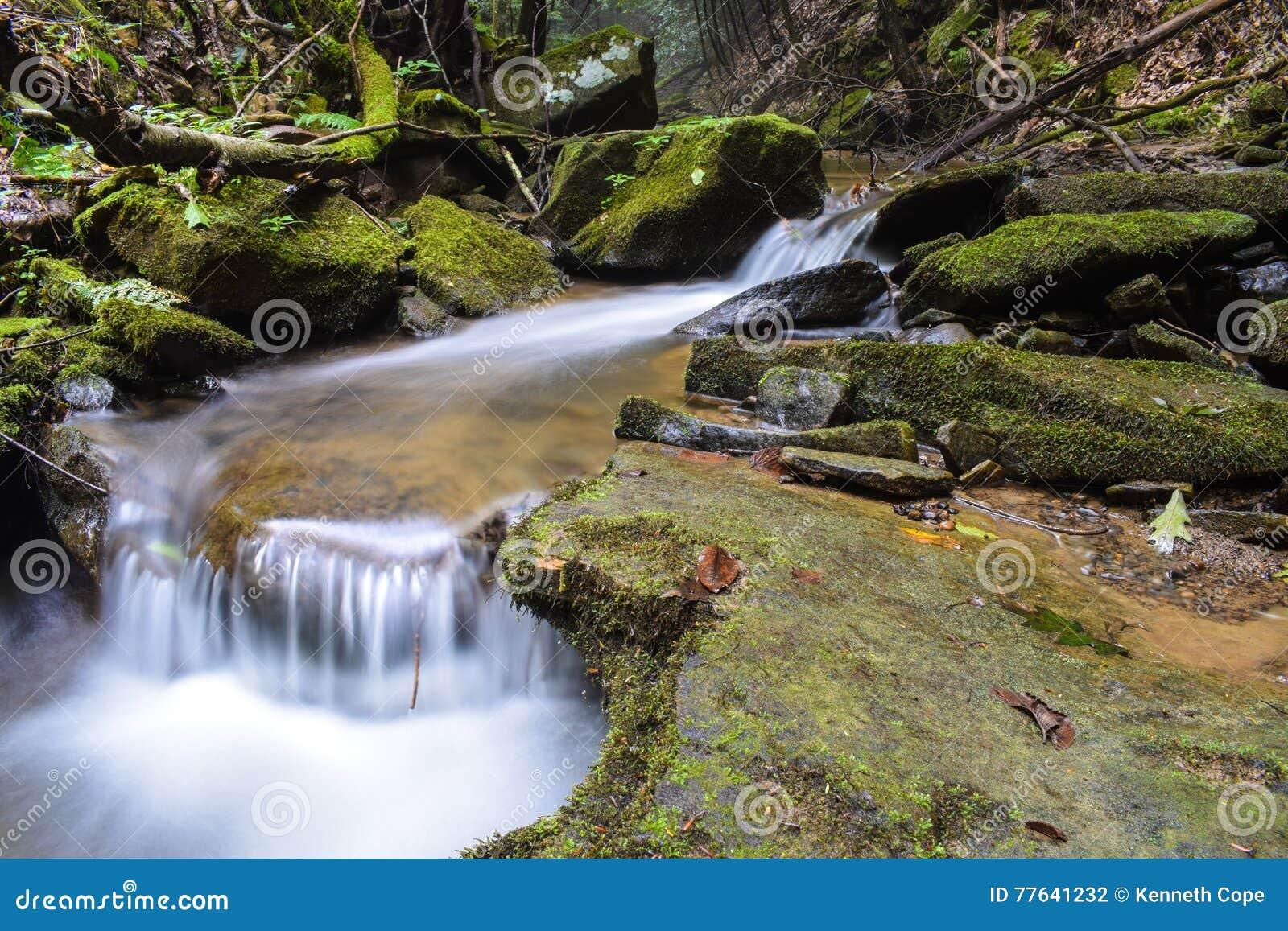 Una pequeña corriente de la trucha en las montañas apalaches