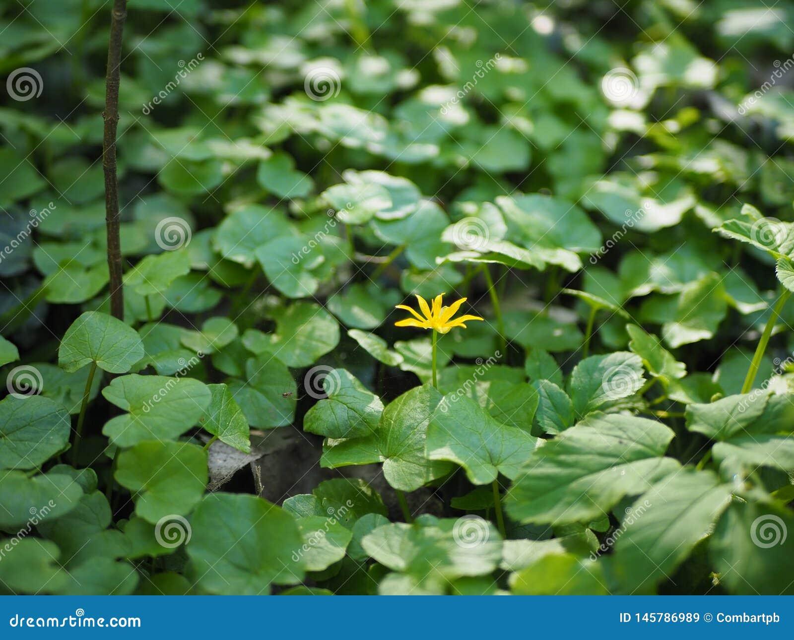 Una pequeña flor amarilla sola