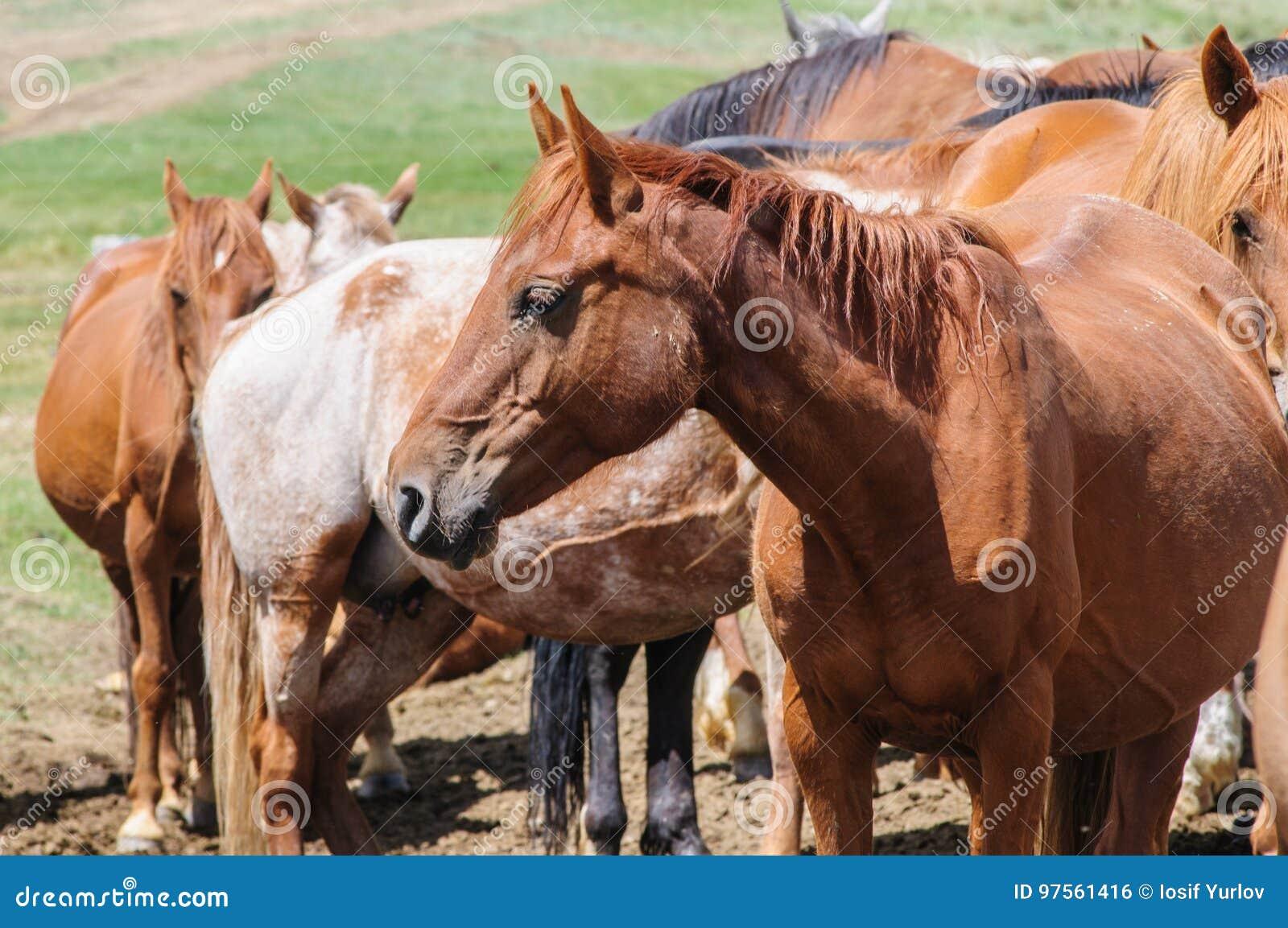 Una pequeña manada de caballos en corral