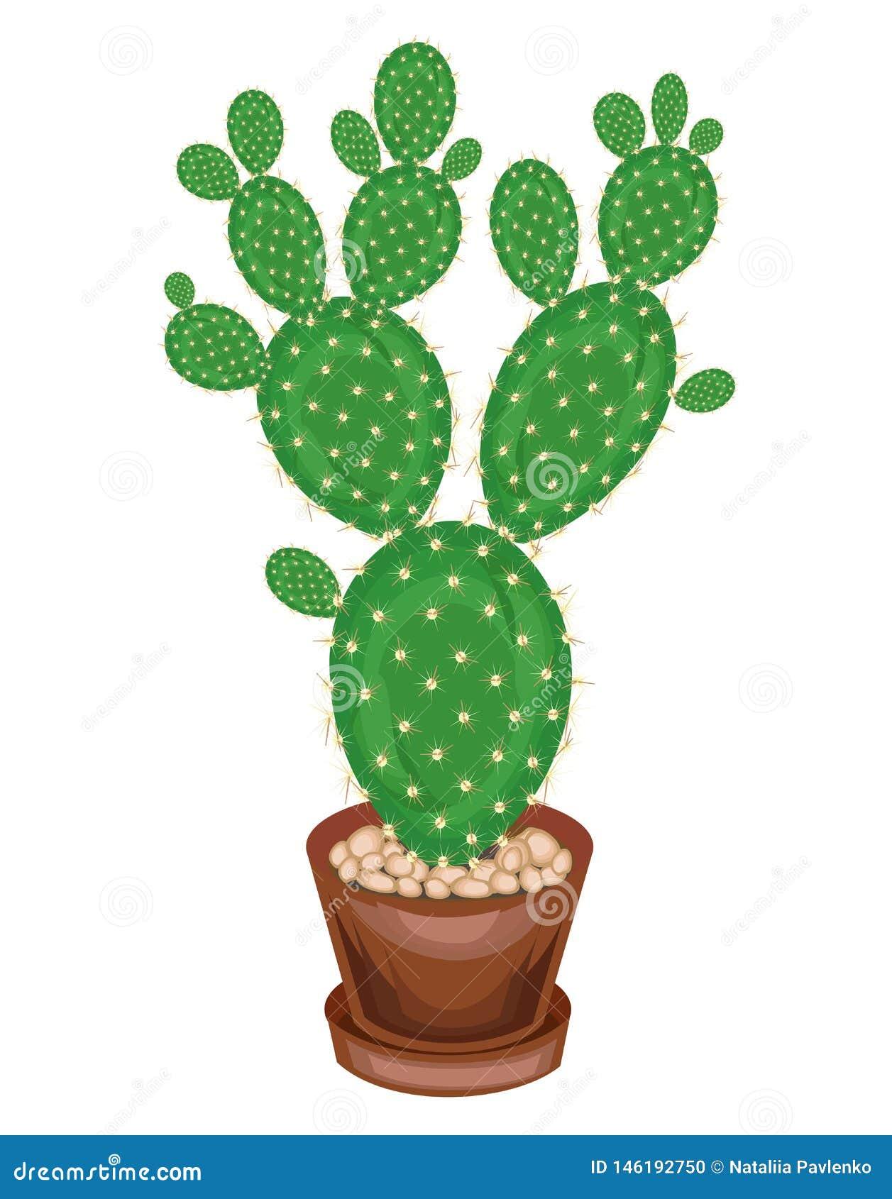 Una pianta in vaso è indicata Opunzia del cactus con i gambi frondosi verdi succosi piani, coperti di spine taglienti Hobby adora