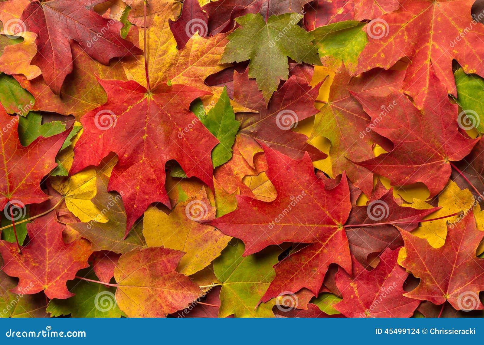 Una pila de Autumn Leaves colorido
