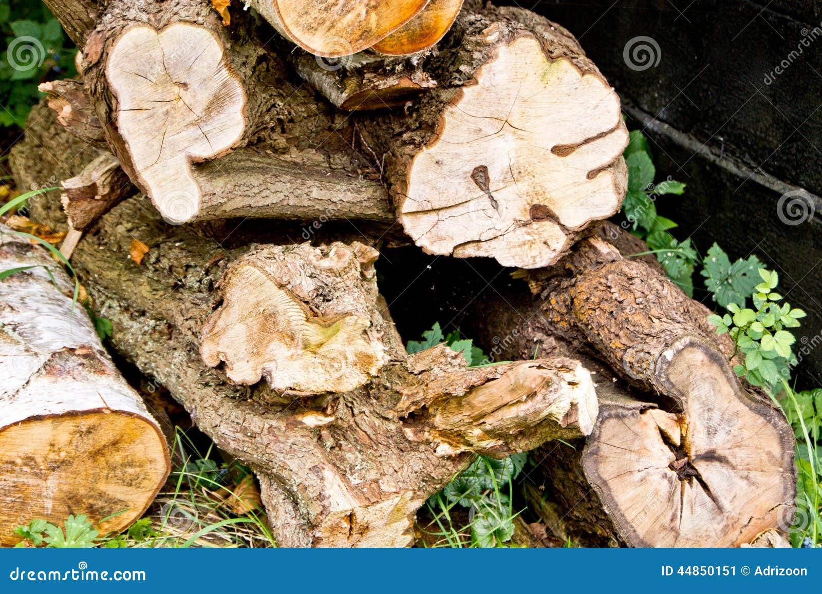 Una pila de troncos de árbol en la madera