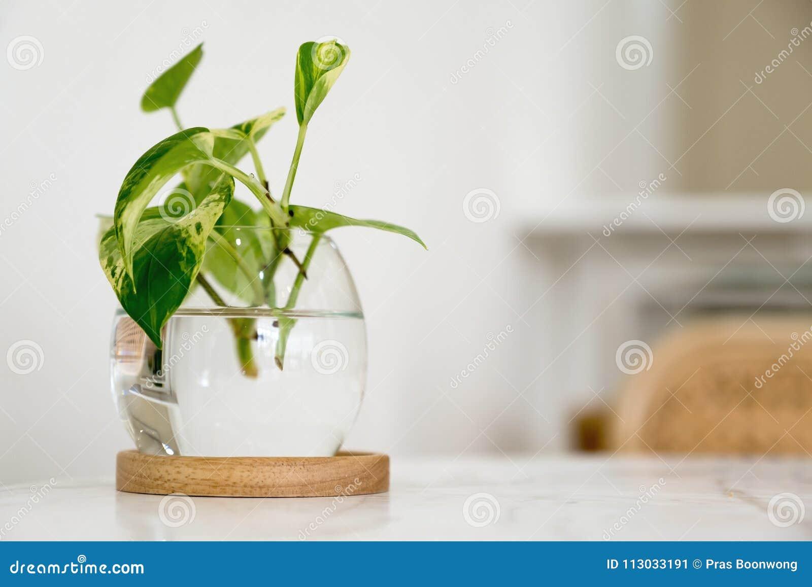 Una planta acuática verde en un tarro de cristal en la tabla