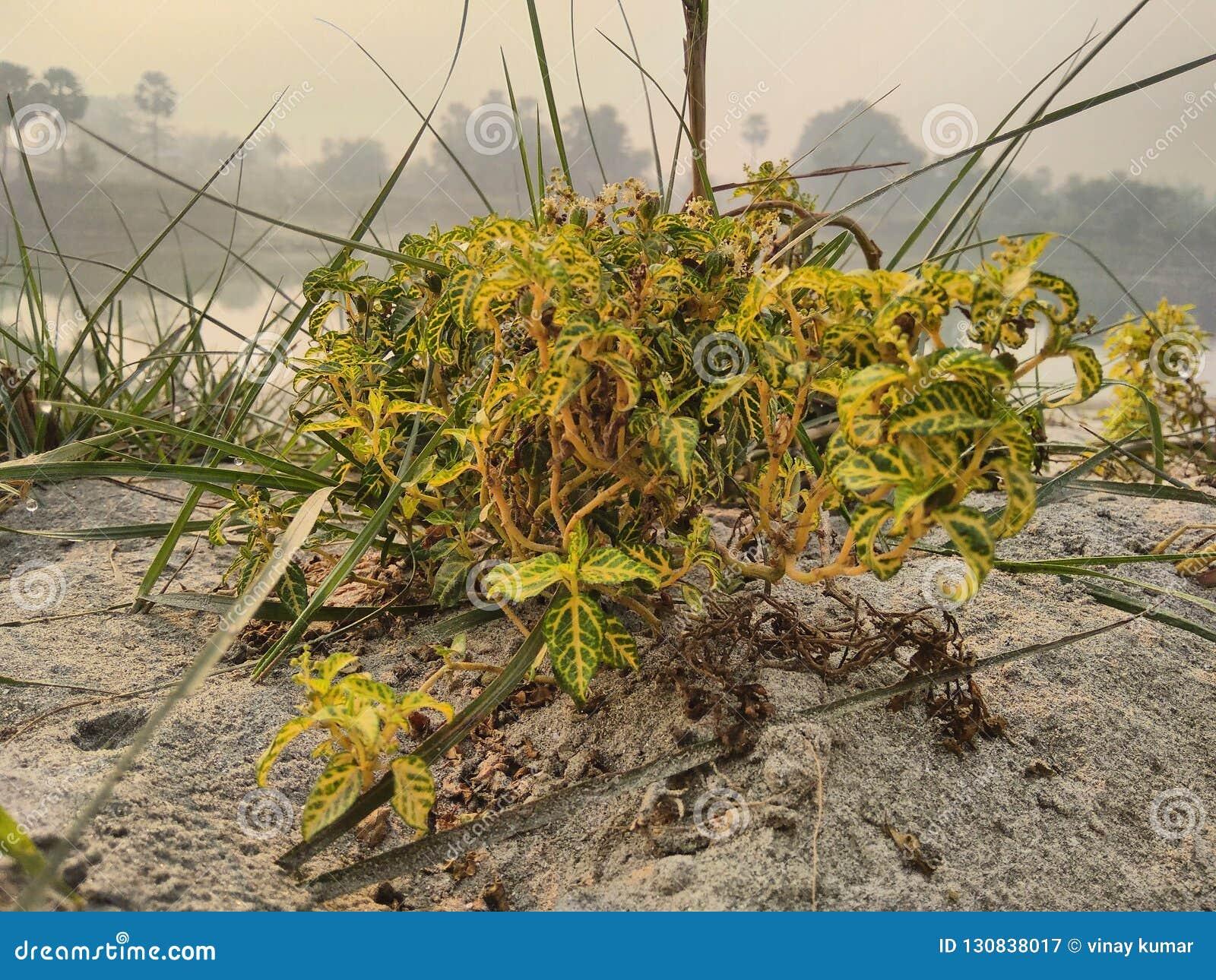 Una planta en la arena en el riverbank