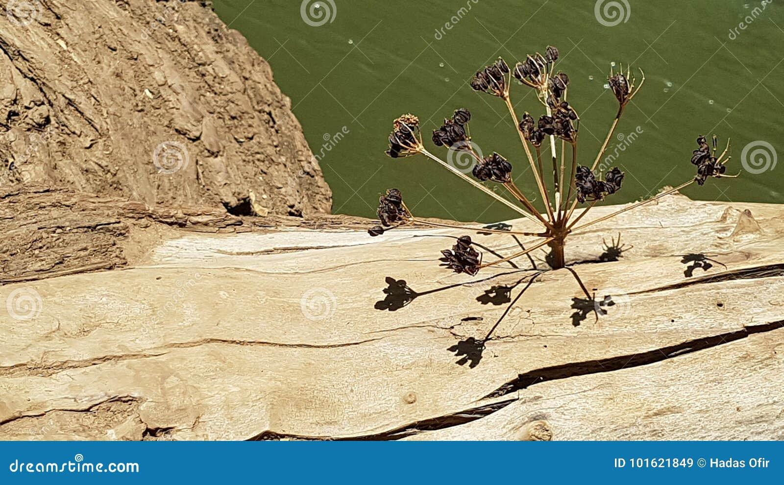 Una planta secada se pegó en agujero de A en un tronco de árbol sobre el río de Hermon que creaba una estructura multidimensional