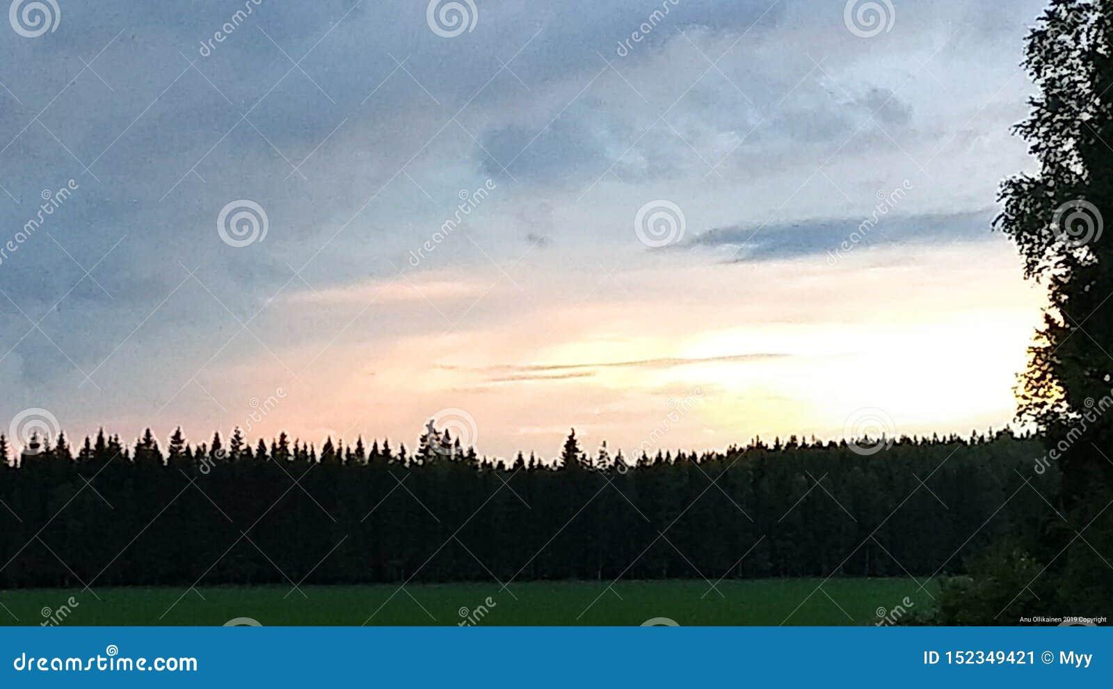 Una puesta del sol, el prado y el más forrest