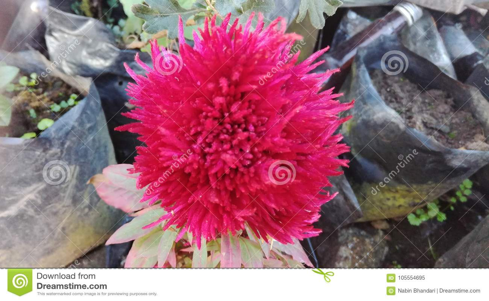 Una qué floración fantástica
