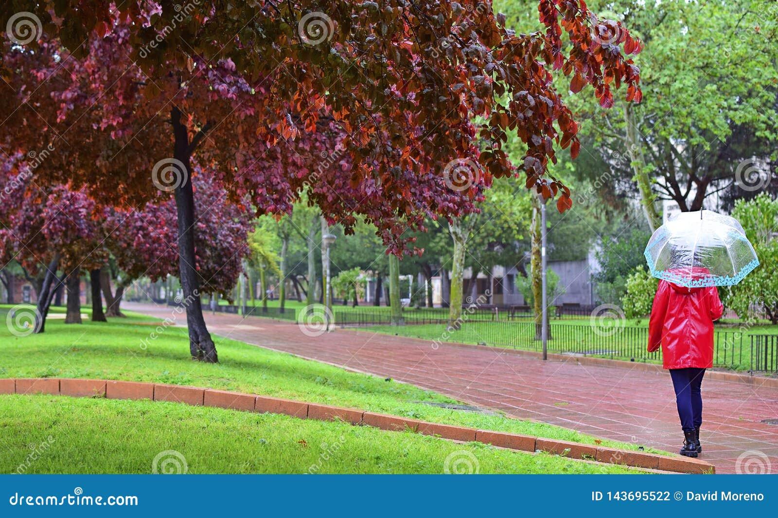 Una ragazza cammina da solo un giorno piovoso attraverso un parco sotto un ombrello