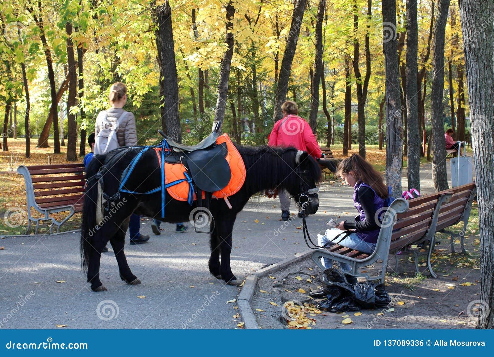 Una ragazza con un piccolo cavallino che si siede su un banco nel parco nel parco sistemato autunno di estate 2018 di Novosibirsk