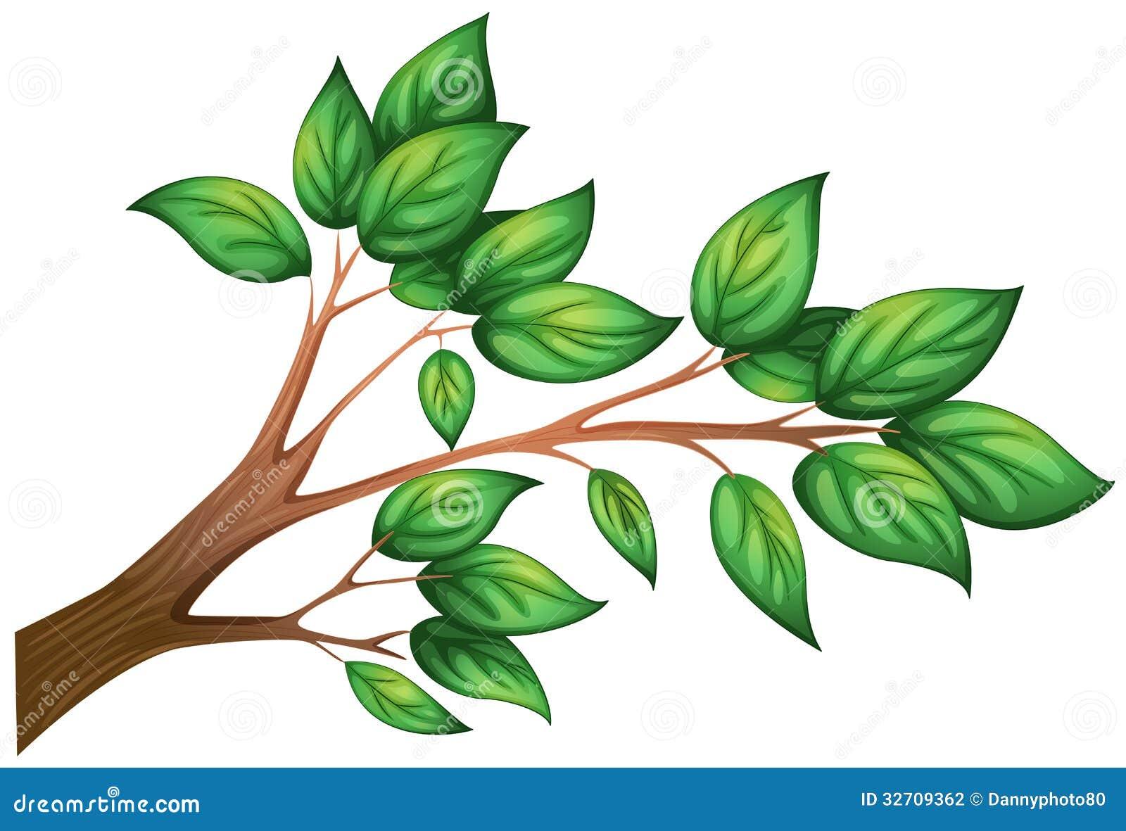 Una rama de un rbol con las hojas ilustraci n del vector for Arboles de hoja perenne sin fruto