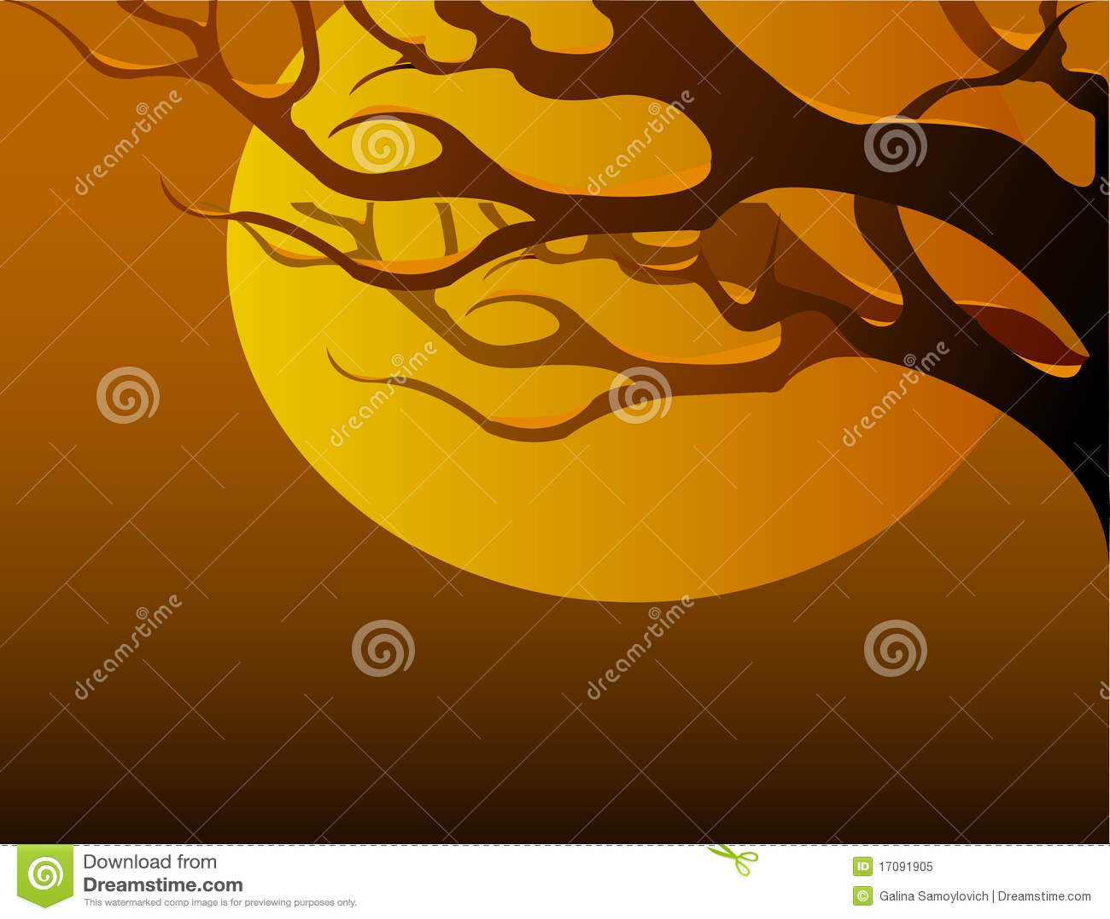 Una ramificación de árbol en la puesta del sol