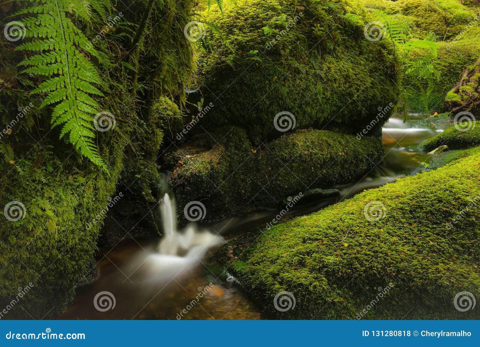 Una scena graziosa della foresta con una piccole cascata e corrente circondate da muschio e dalle felci verdi fertili
