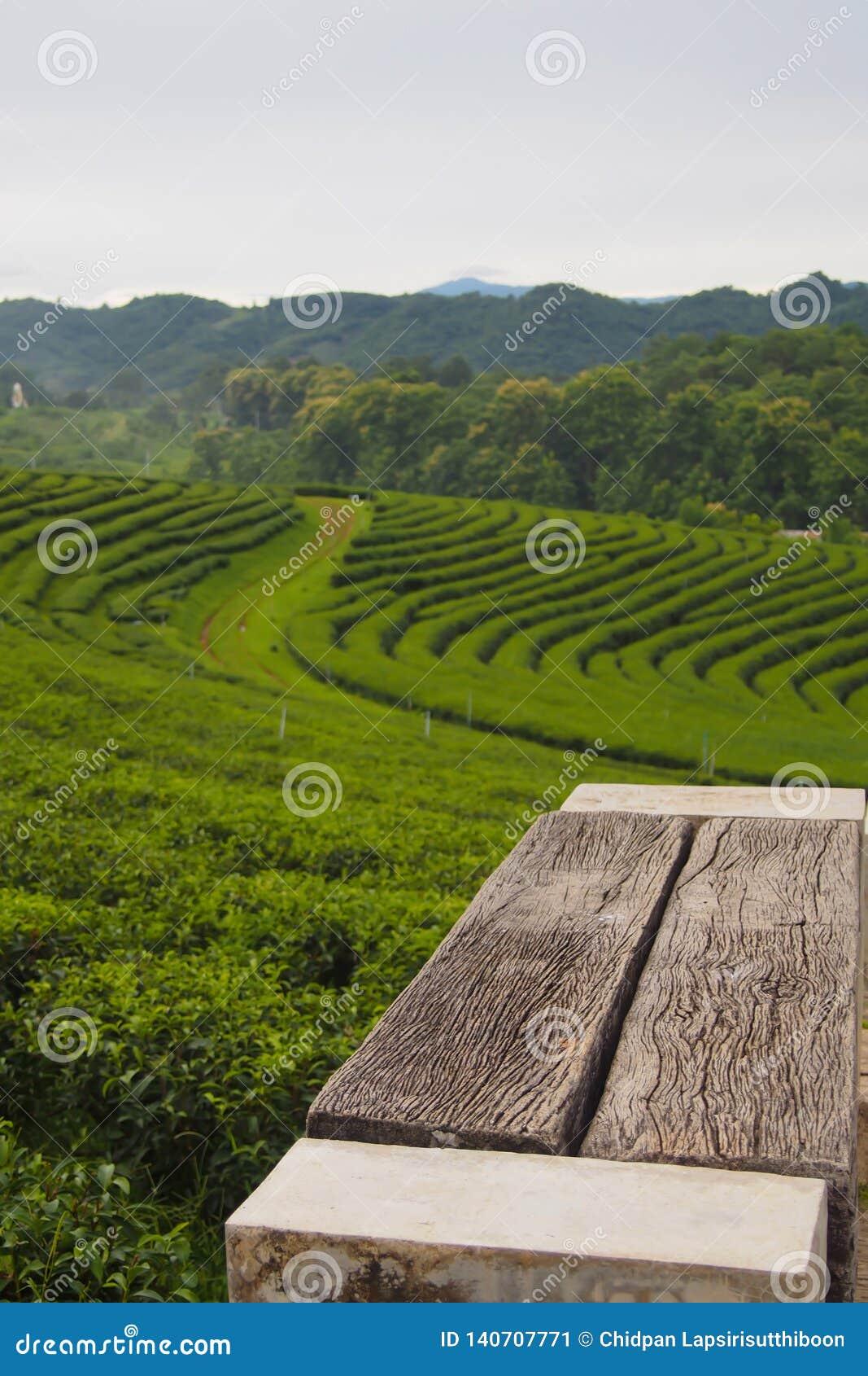 Una silla de madera vacía fijada en una plantación de té verde es una fila cerca de la montaña