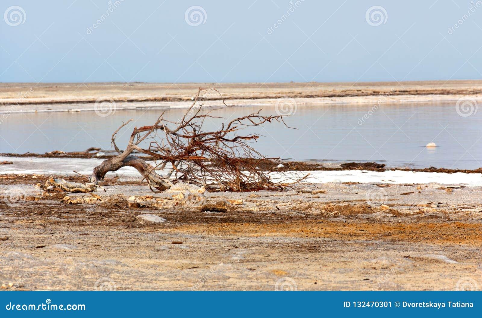 Una smagliatura sulla ferita del mar Morto