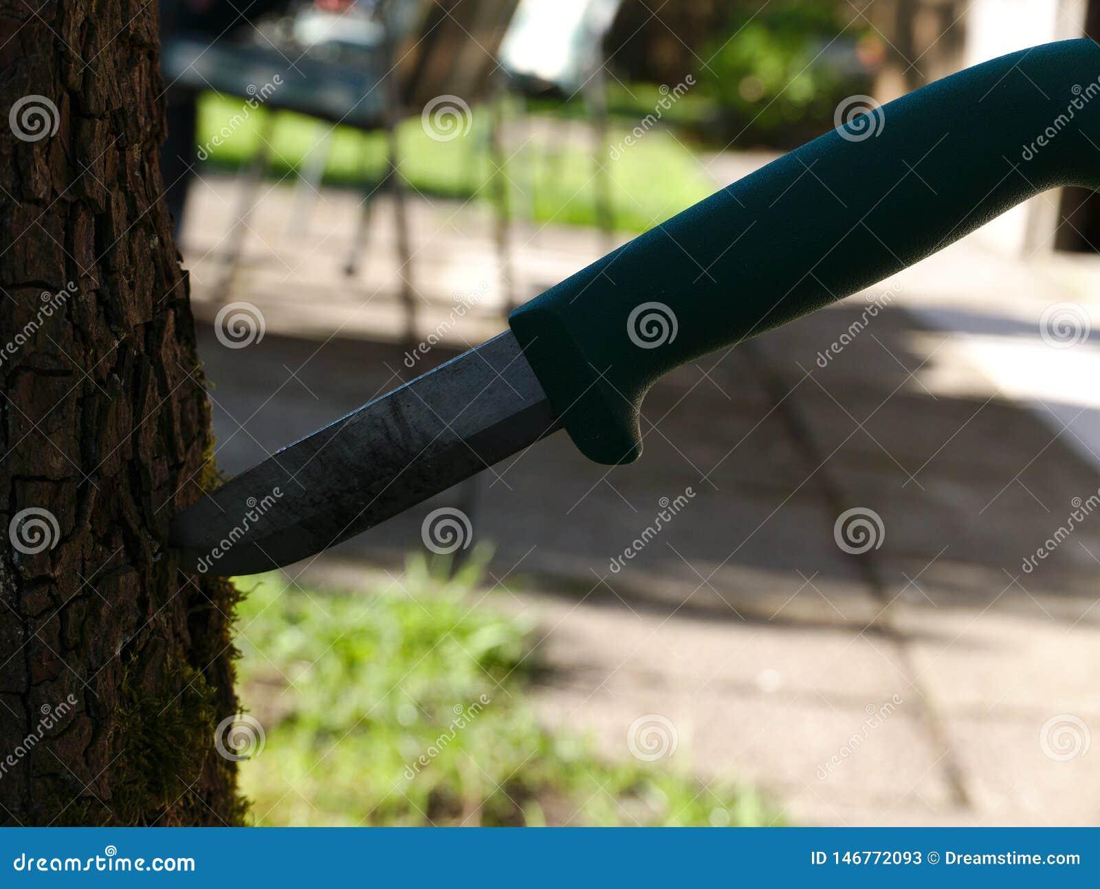Una sopravvivenza e un coltello funzionante è nella corteccia di un albero