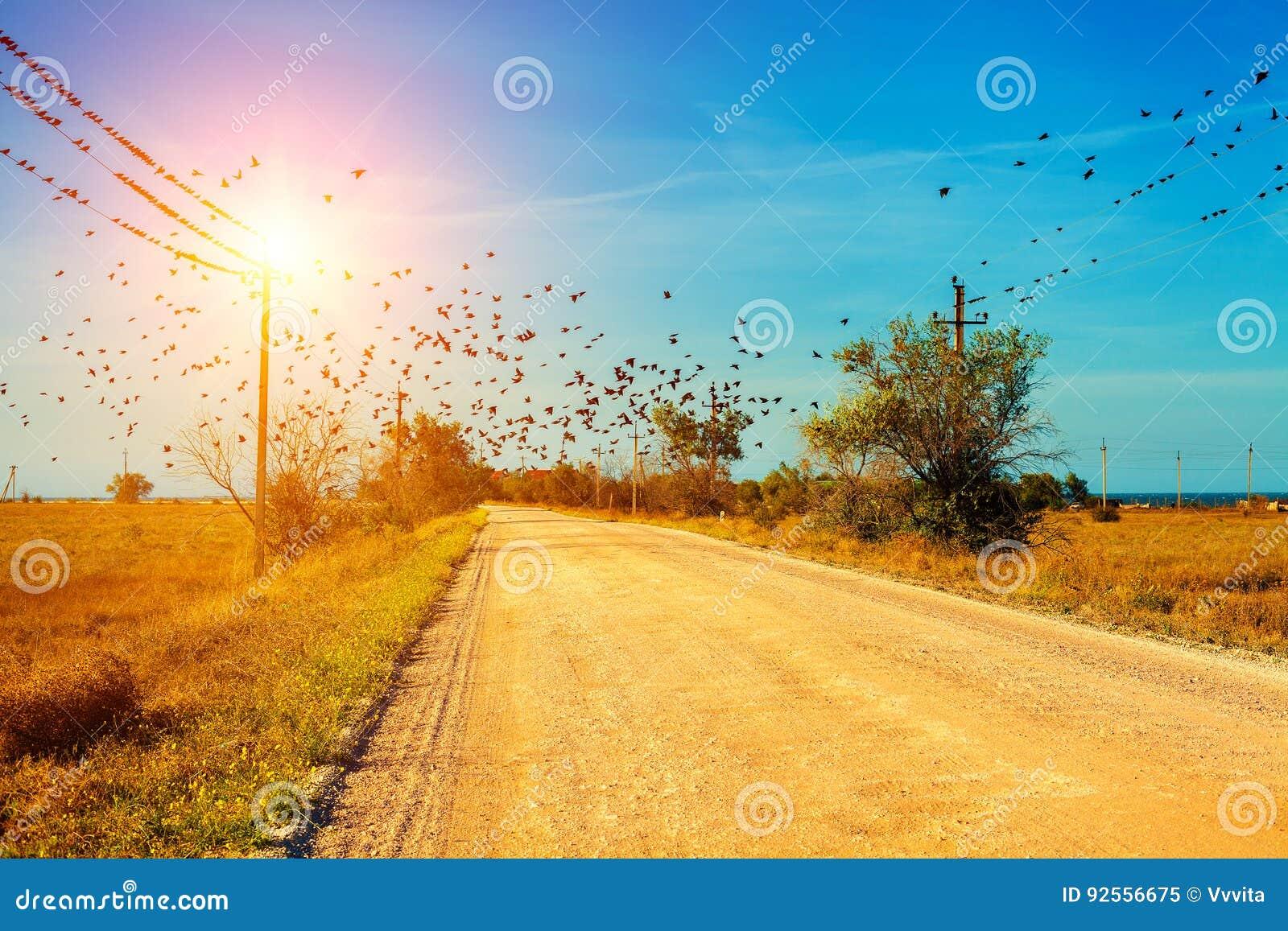 Una strada non asfaltata nella steppa