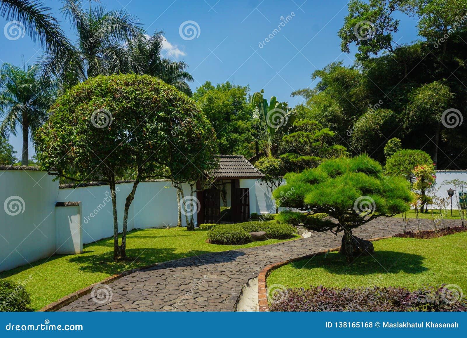 Una strada o una via giapponese sul giardino con roccia o sulla struttura di pietra con l albero ed i bonsai verdi - foto