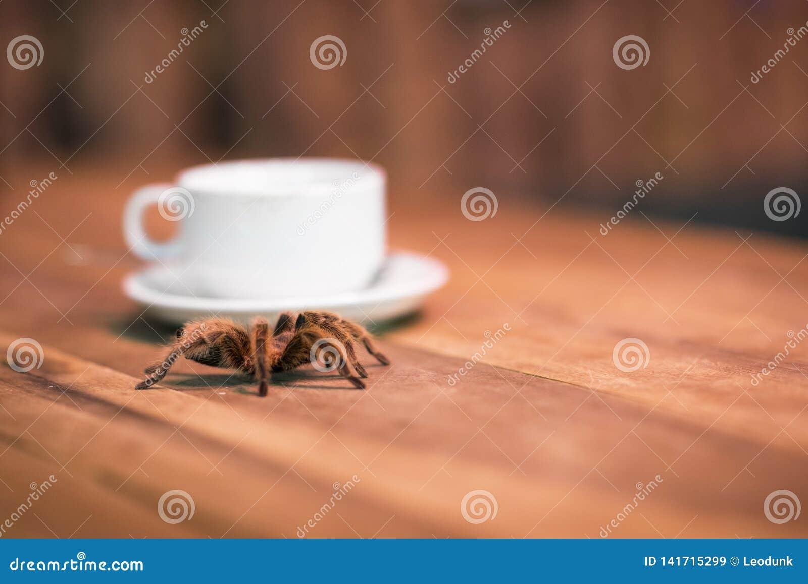 Una tarantola e una tazza di caffè Bevanda in una barra dell animale domestico con un aracnide pelosa selvaggia su una tavola di