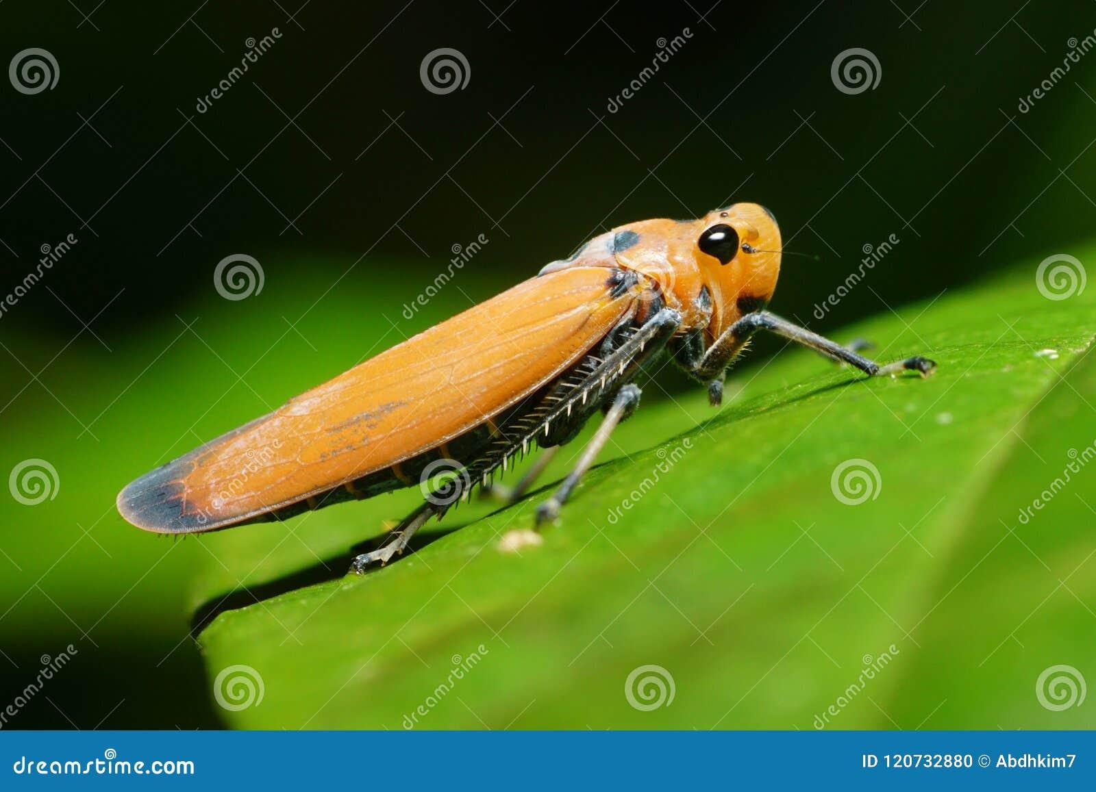 Una tolva anaranjada de la hoja