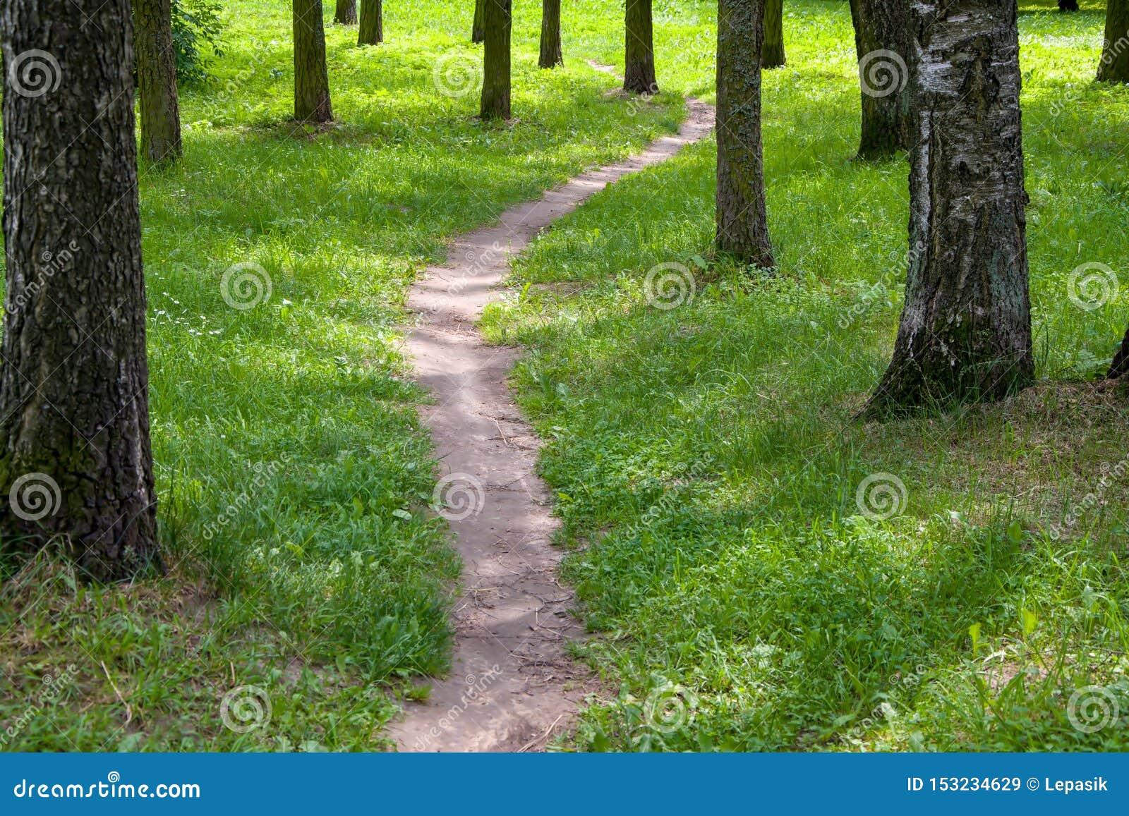 Una trayectoria en el parque entre los árboles, una trayectoria estrecha en el bosque del verano