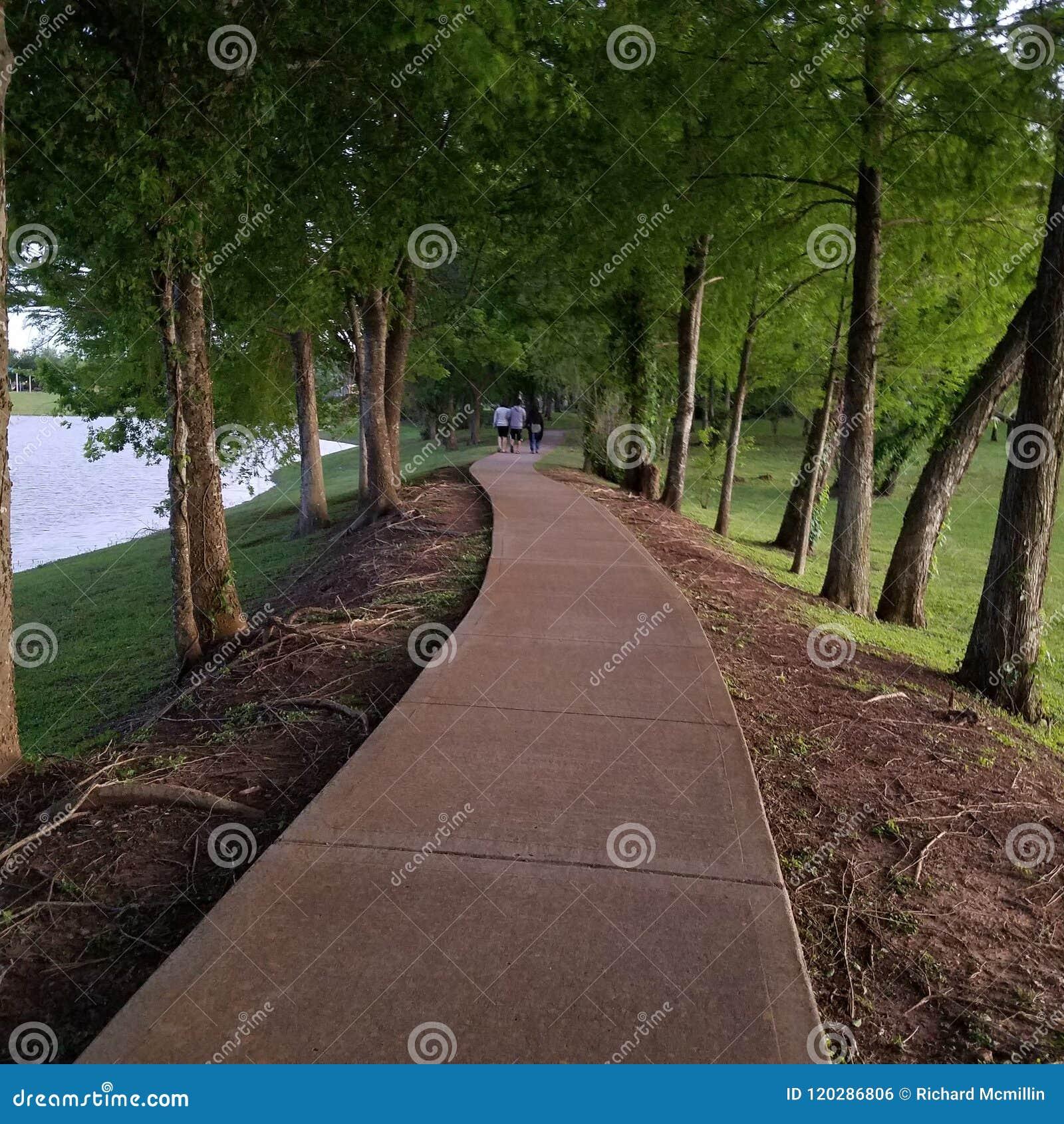 Una trayectoria hermosa a través del bosque