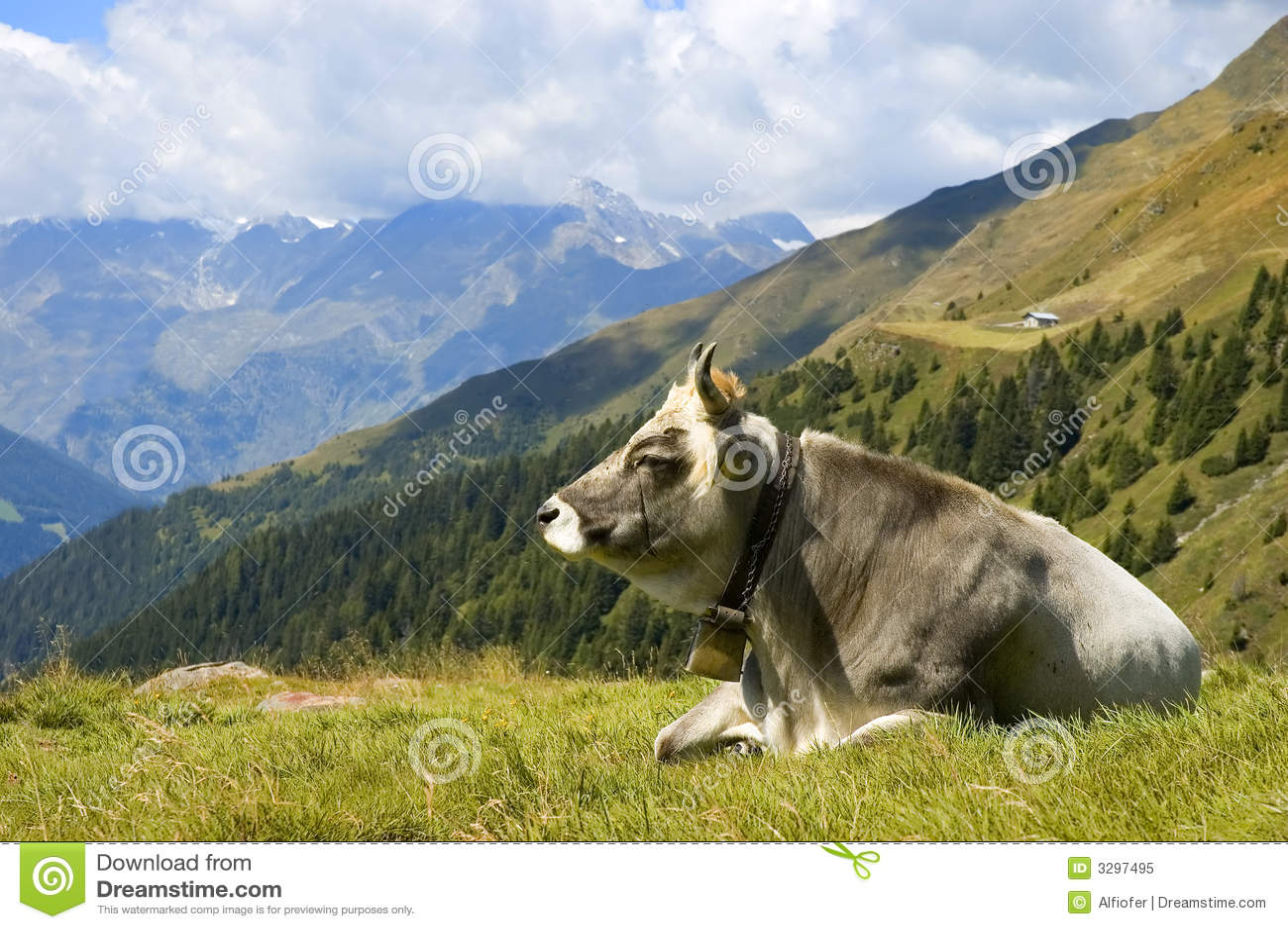 Una vaca en hierba de la montan@a