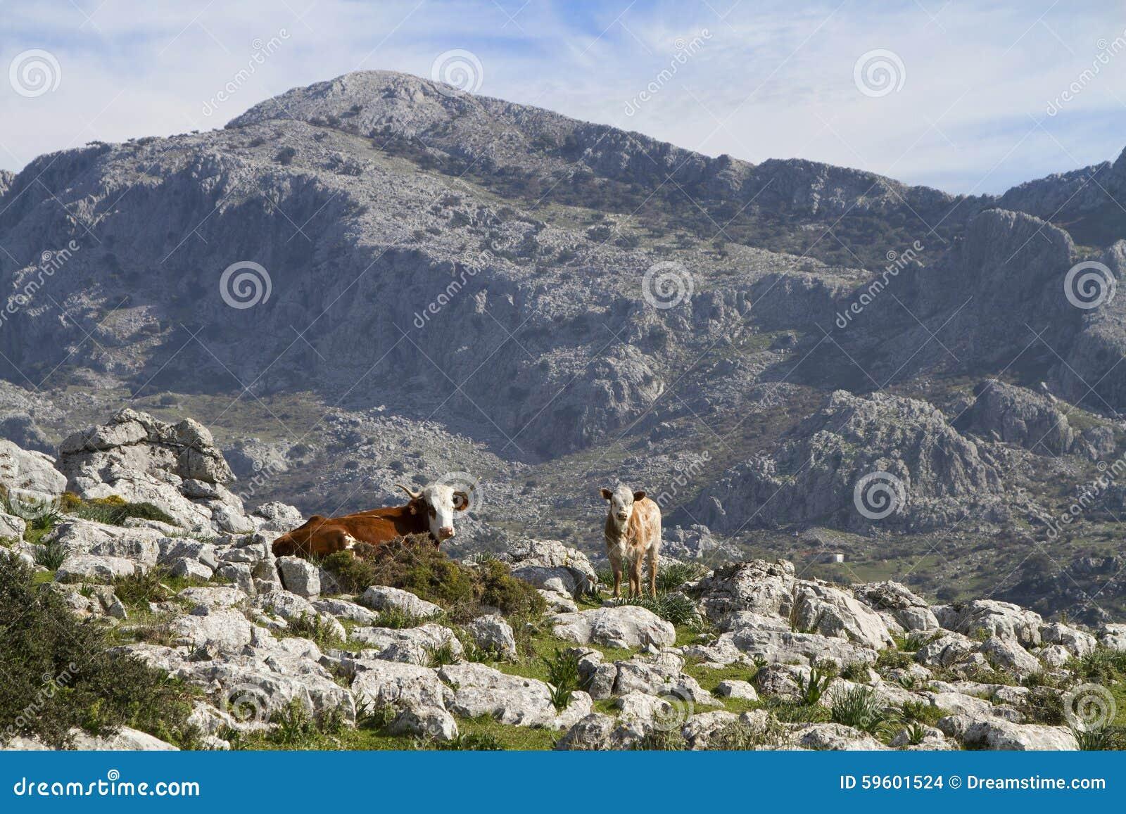 Una vaca y su becerro