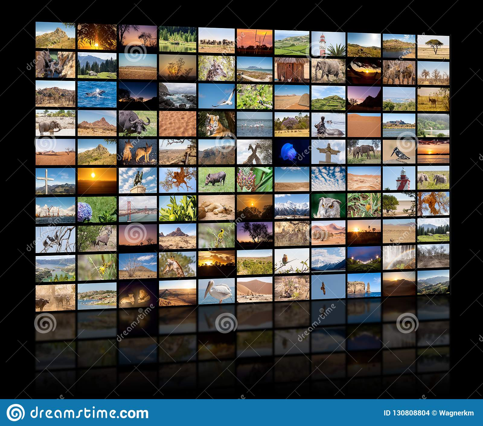 Una variedad de imágenes de los paisajes y de los animales como pared grande de la imagen, canal documental