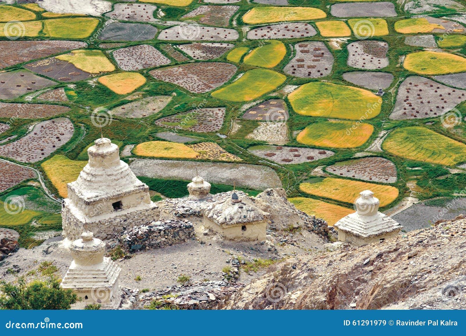 Una vista aérea de los campos durante tiempo de cosecha, valle de Zanskar, Ladakh, Jammu y Cachemira, la India