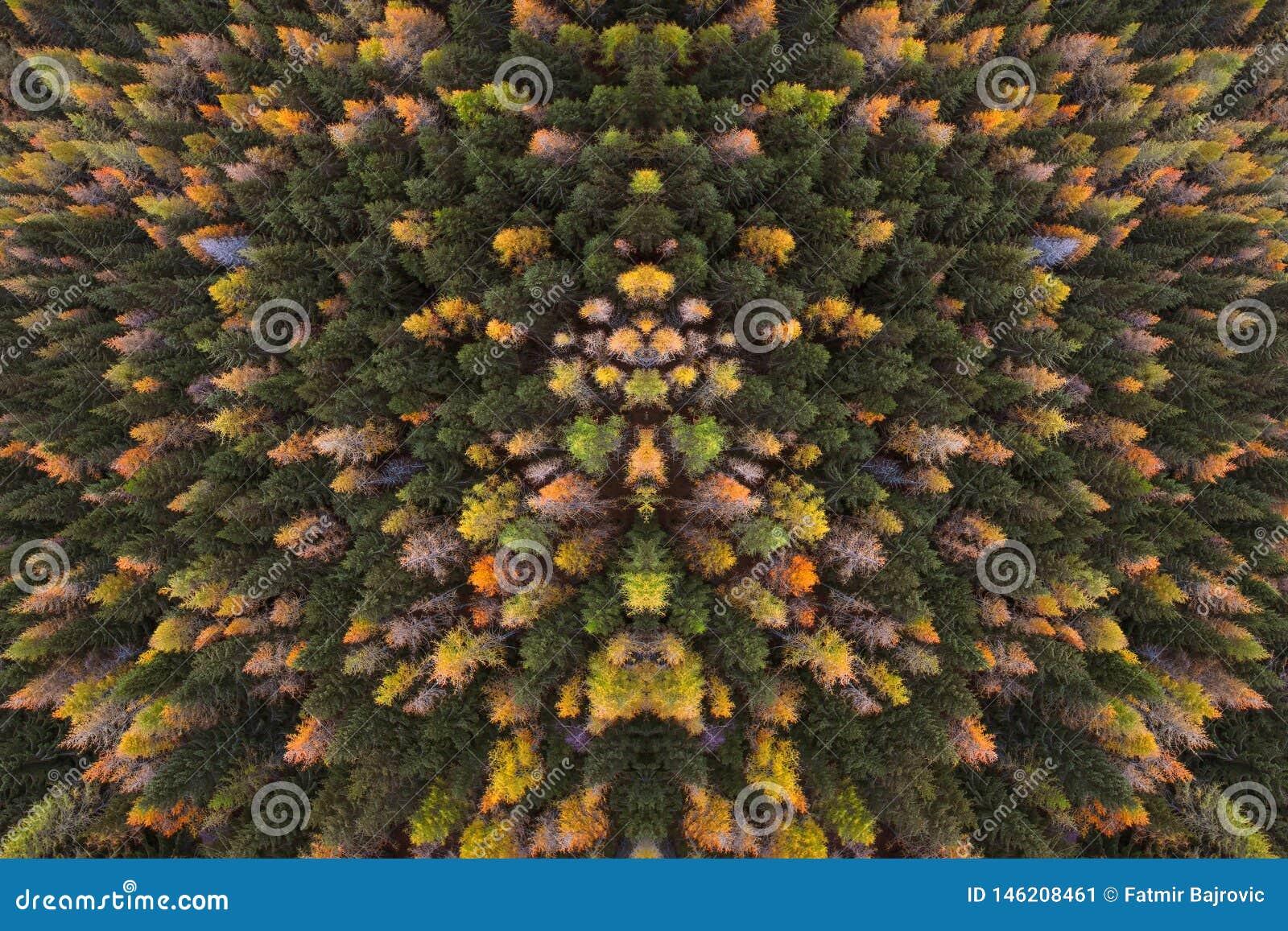Una vista da sopra alla prospettiva dell uccello della foresta A sui colori di autunno degli alberi nel legno